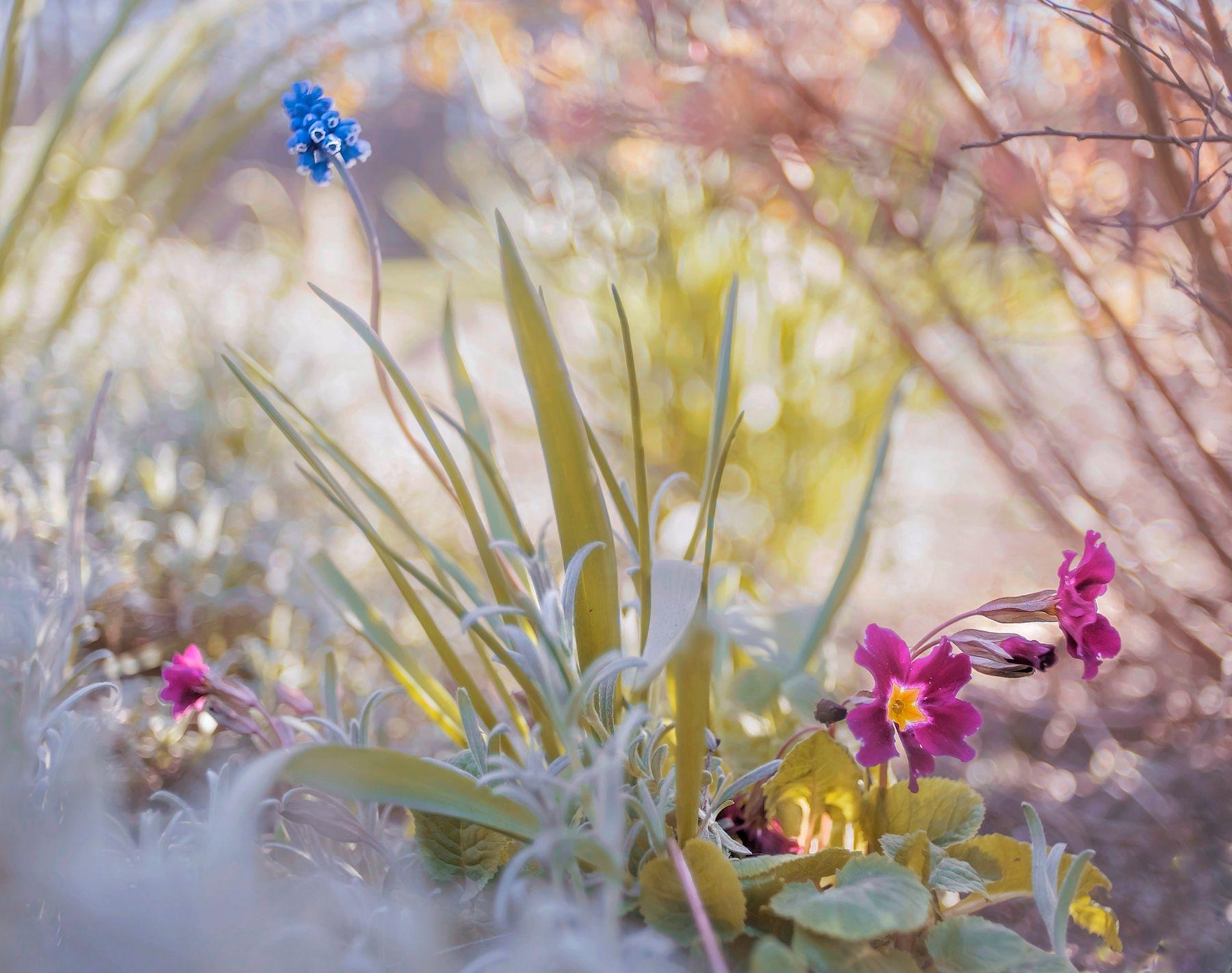 Соло Цветок сад солнце