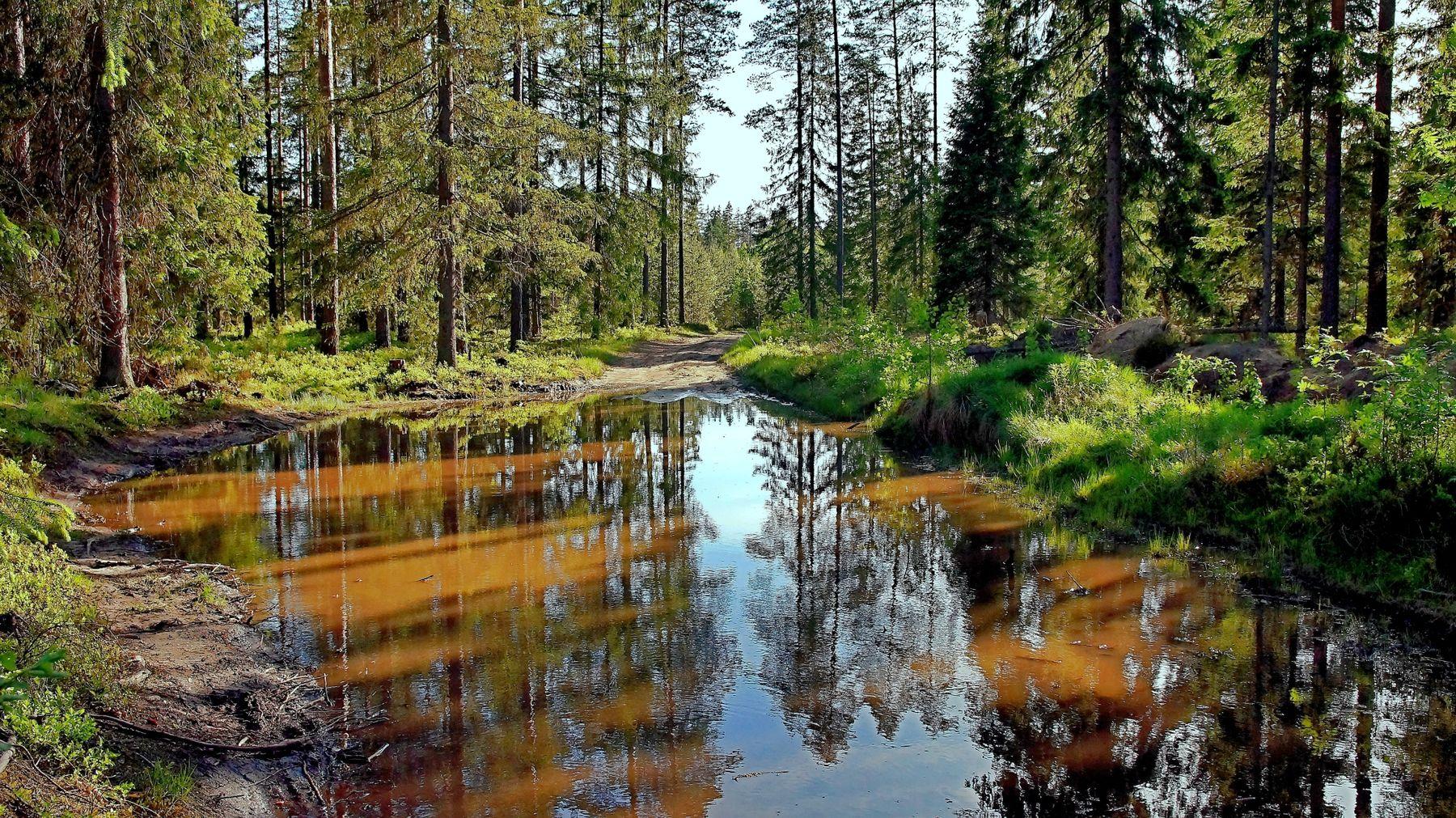 Лесные дороги Лето лес дорога вечер