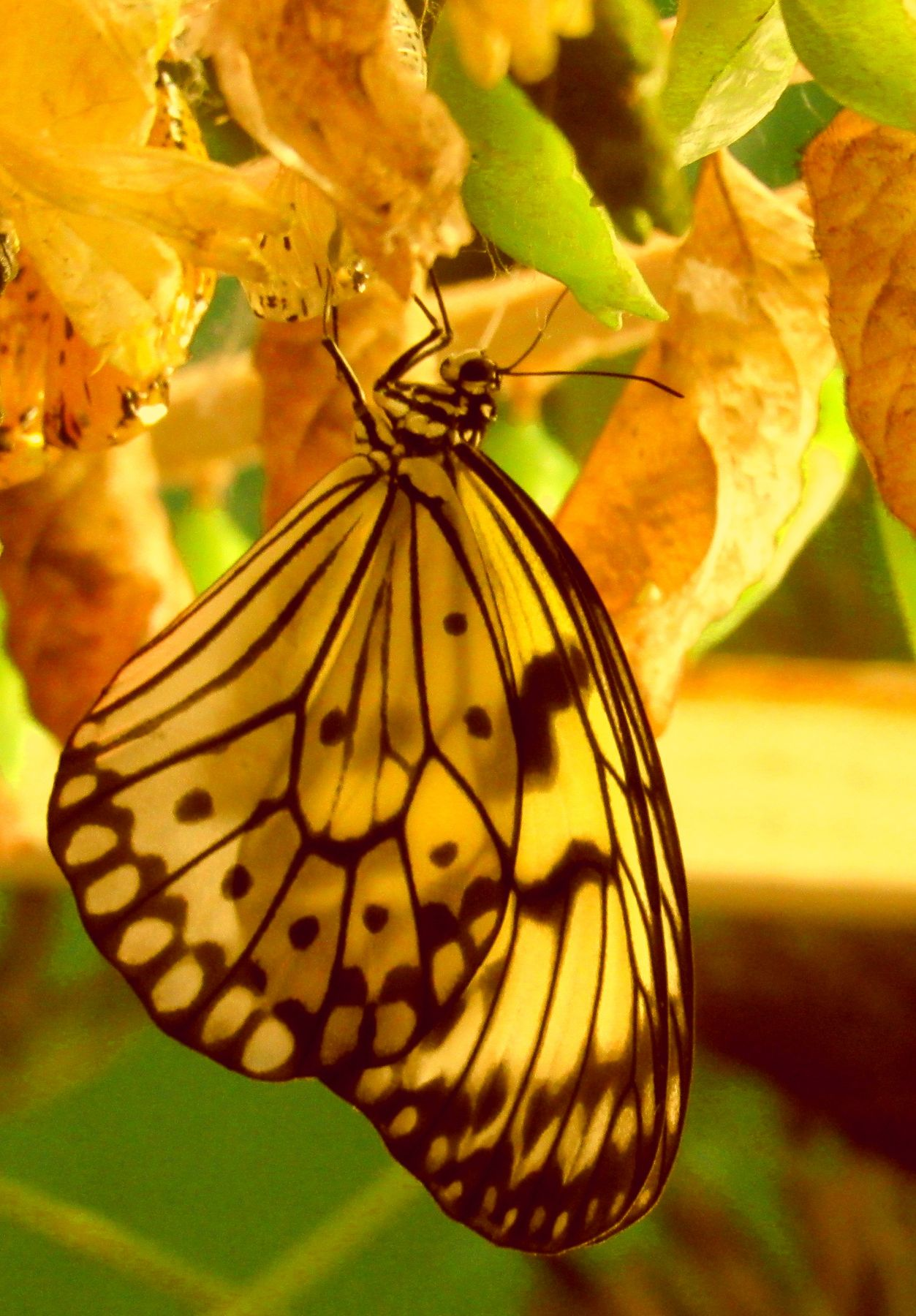 на выставке тропических бабочек