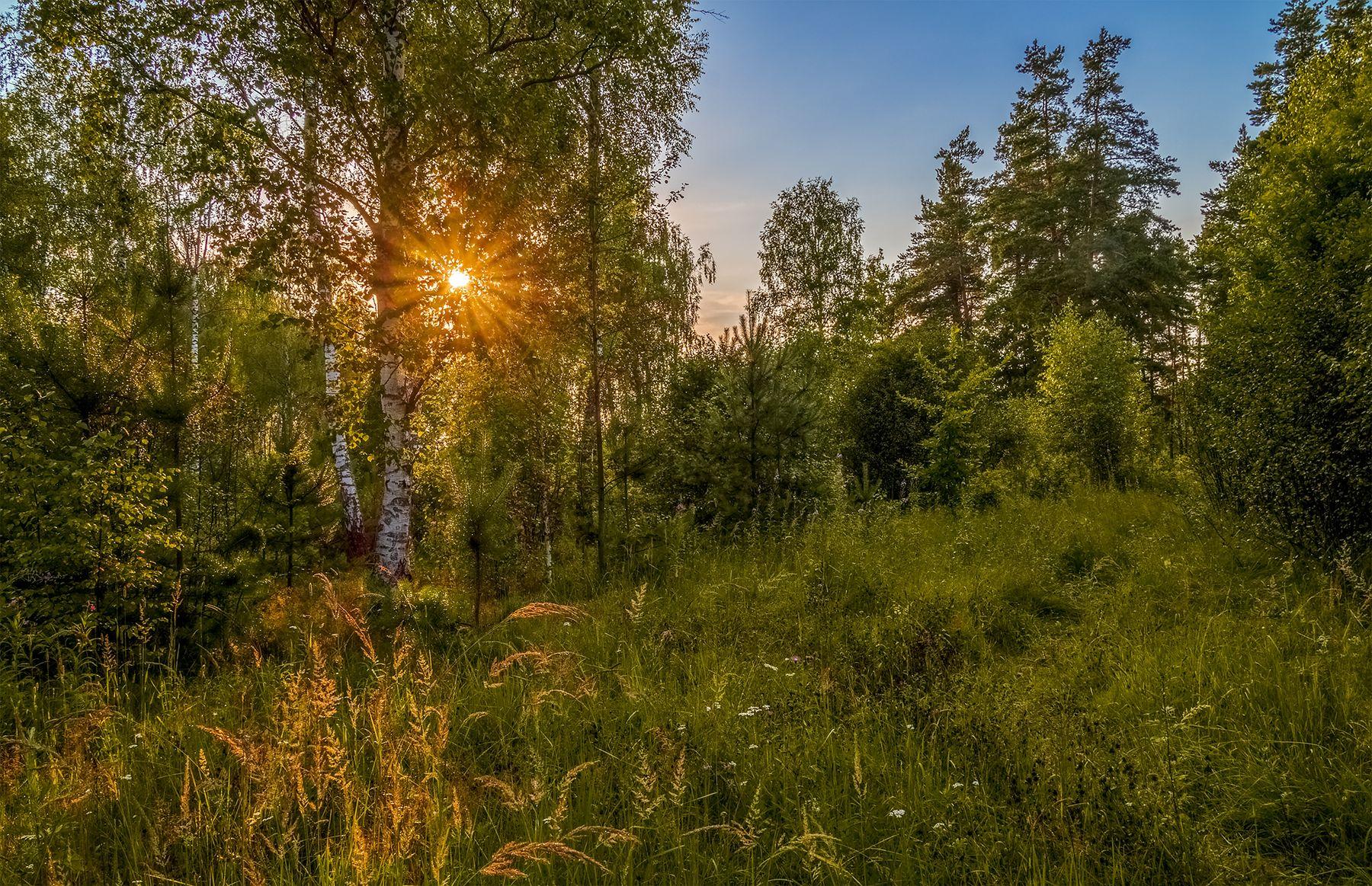 На закате дня в лесу.