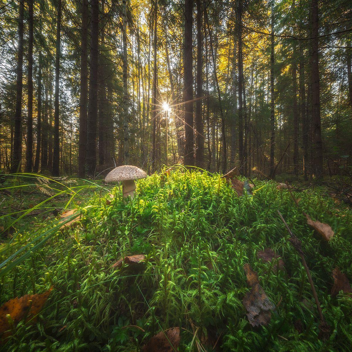 *** лес осень