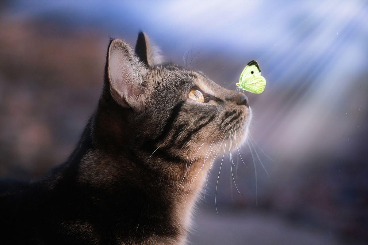 """Иногда """"чудеса"""" случаются)) кот глаза взгляд свет цвет портрет день животные фон боке бабочка"""