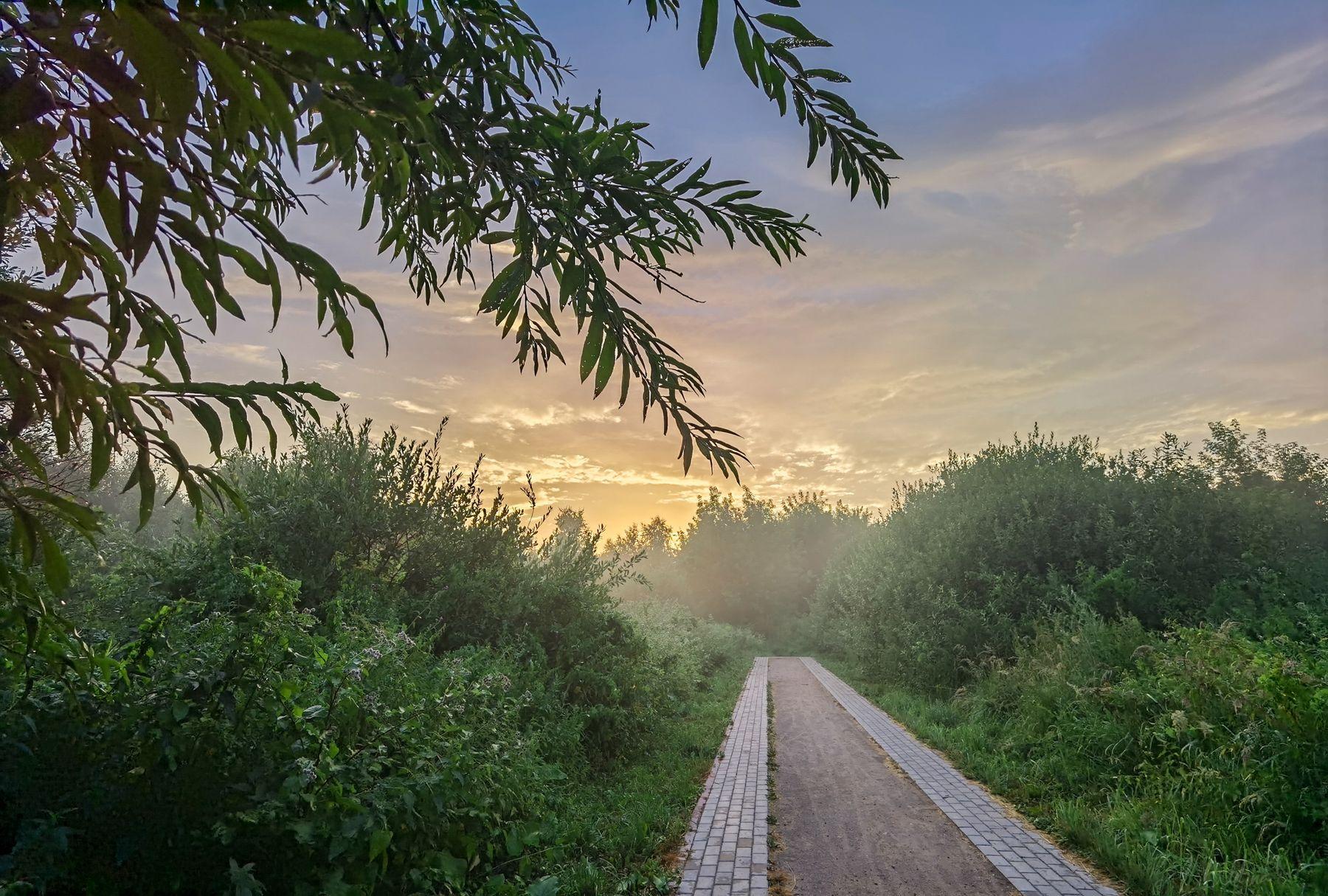 Там, где заканчиваются дорожки, начинаются  туманы лес озеро дорога тропинка туман ивы вечер закат облака