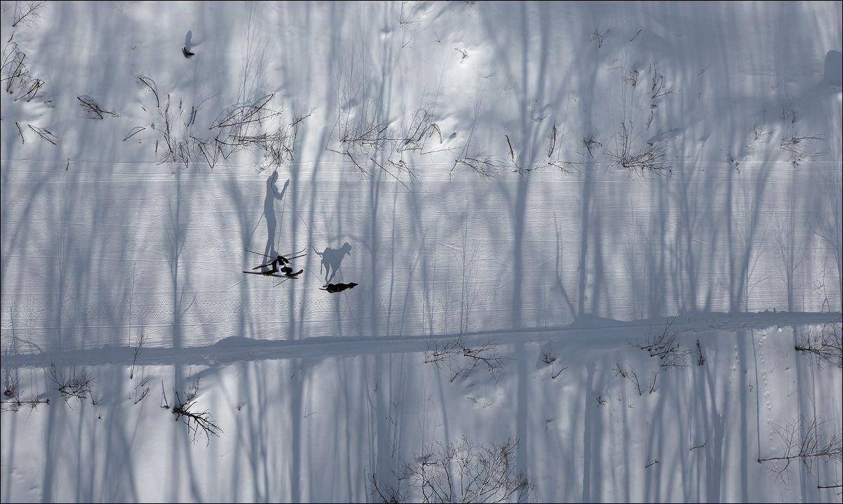 СЛЕДУЯ ТЕНЬЮ Россия, Камчатка, тени, дорога, деревья, собака, лыжник, скиджоринг, Skijоring, пейзаж.