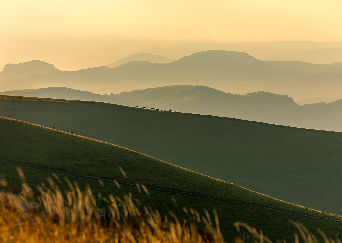 Горизонты Горы гора Кавказ лошади коровы рассвет туман дымка даль горизонт холмистый лето табун Северный Теберда вершина путешествие