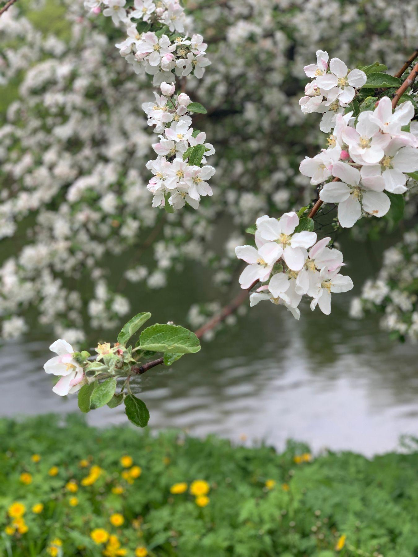 Весна.Цветение