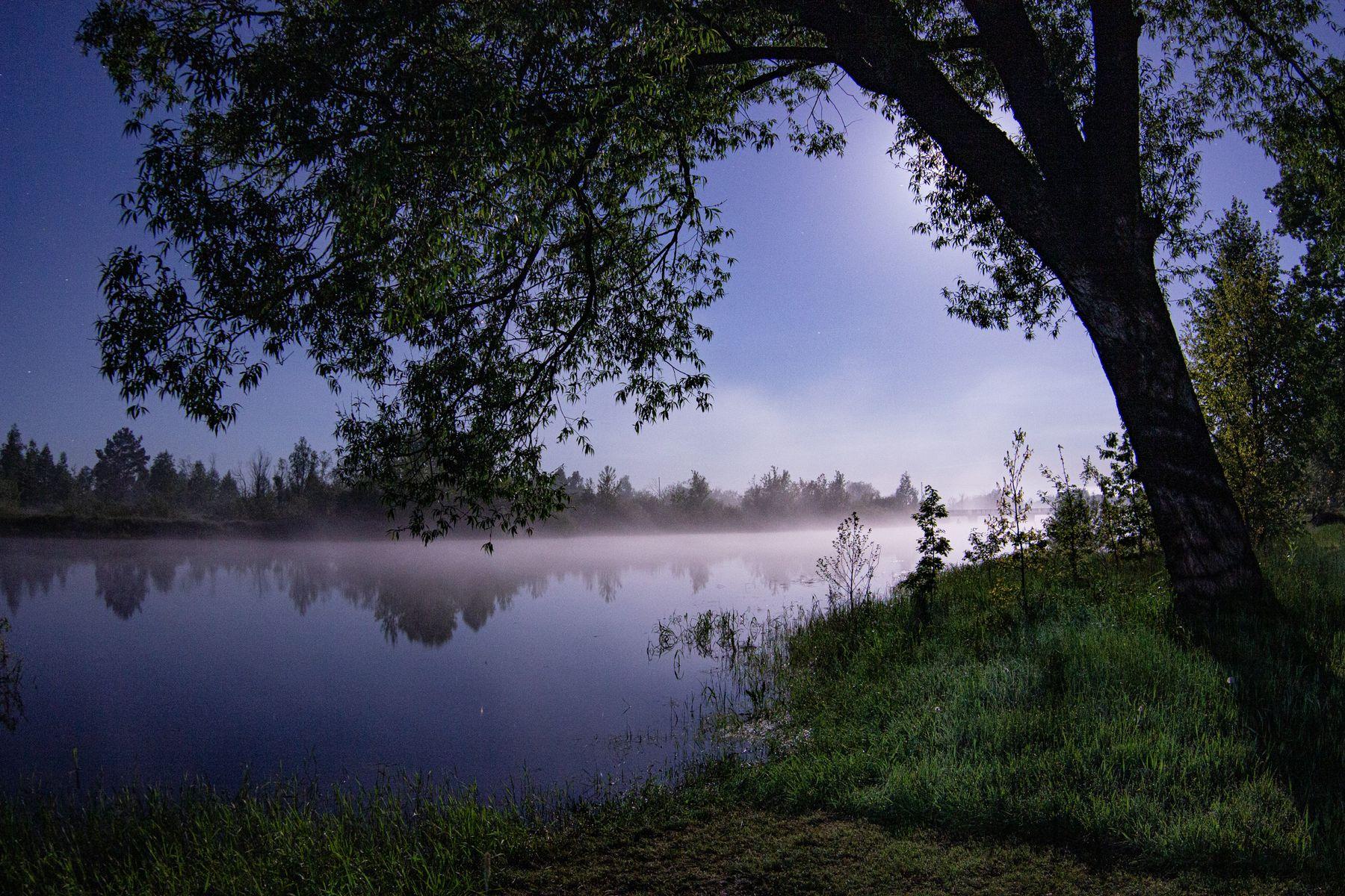 Ночной туман у реки туман река свет луна тень дерево ночь