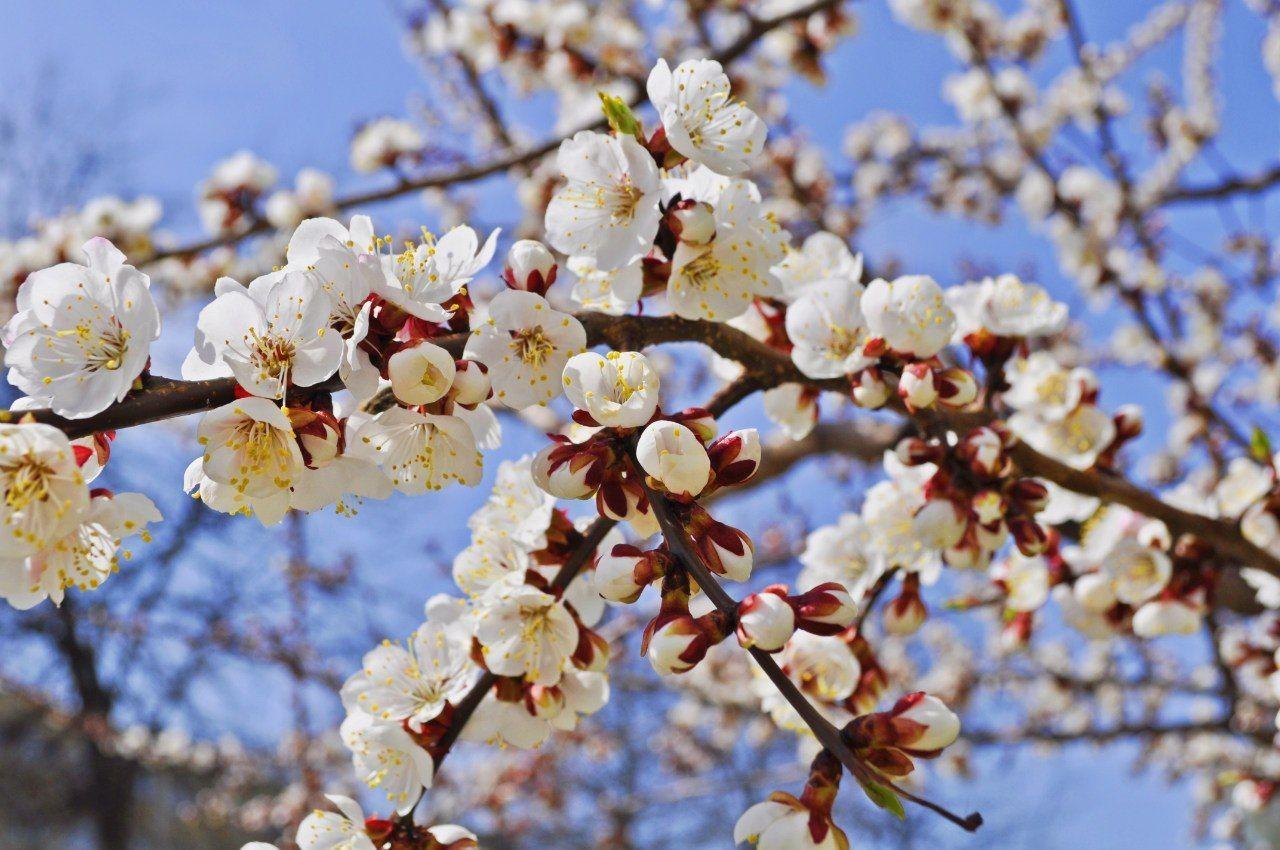 *** весна цветы деревья