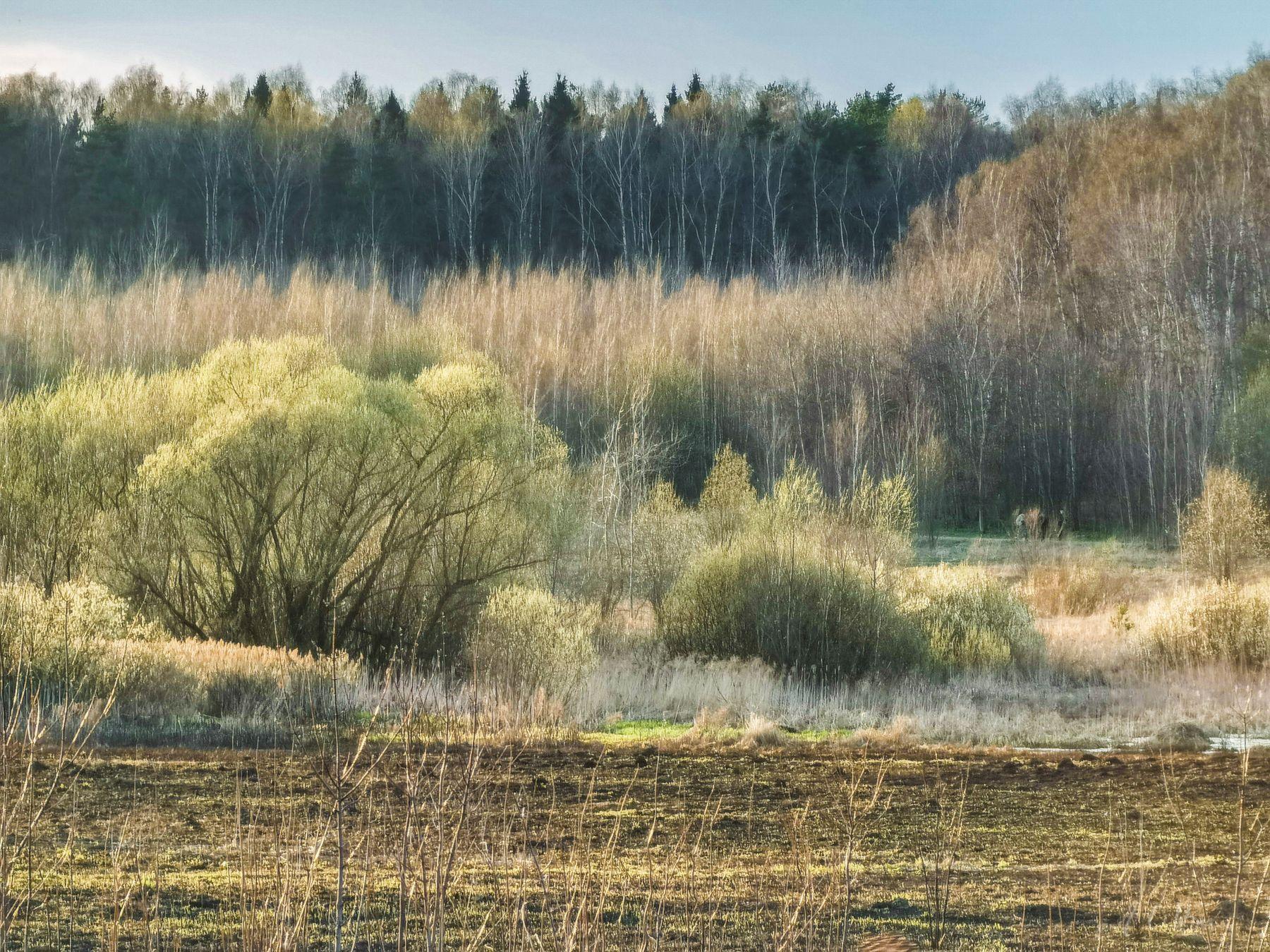 Зеленая дымка апреля поле лес ивы березы болото сосны