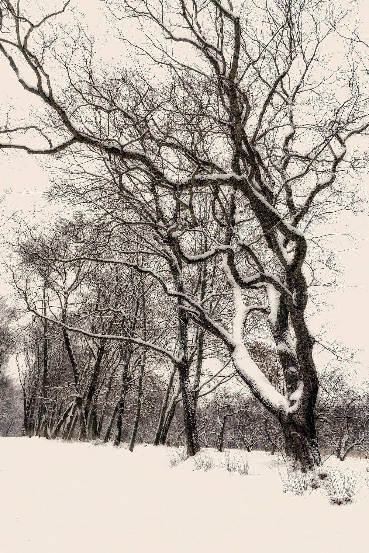 абстракция абстракция природа зима дорога снег лес дерево тишина спокойствие раздумье