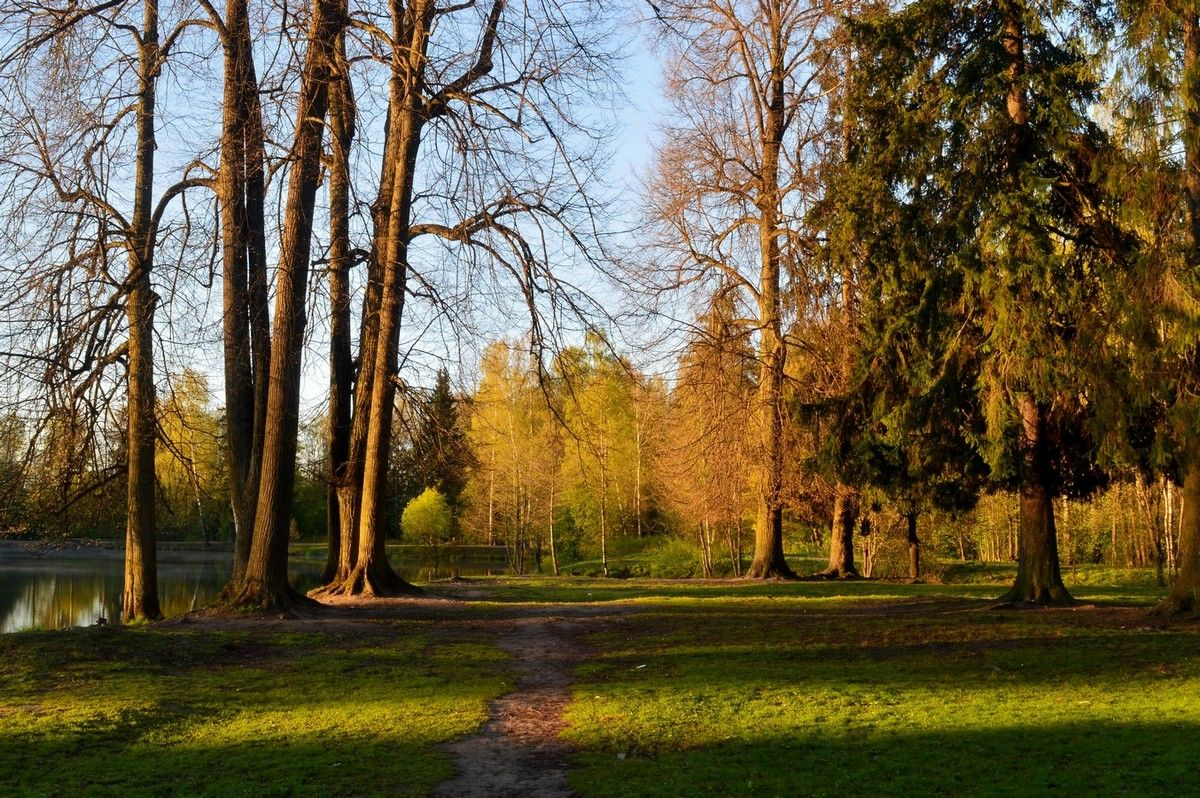 Утро в парке.......