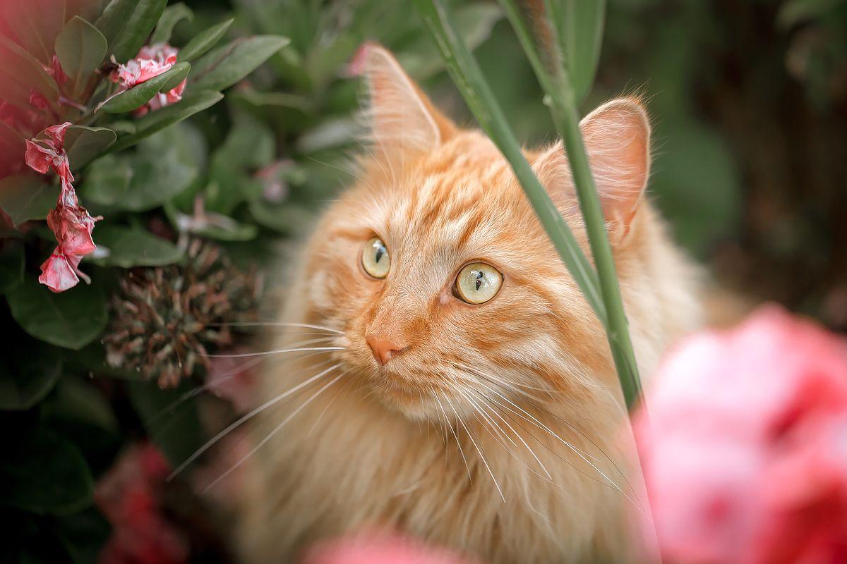 Портрет кота кот кошка животные рыжий взгляд кошачий глаз усатый полосатый