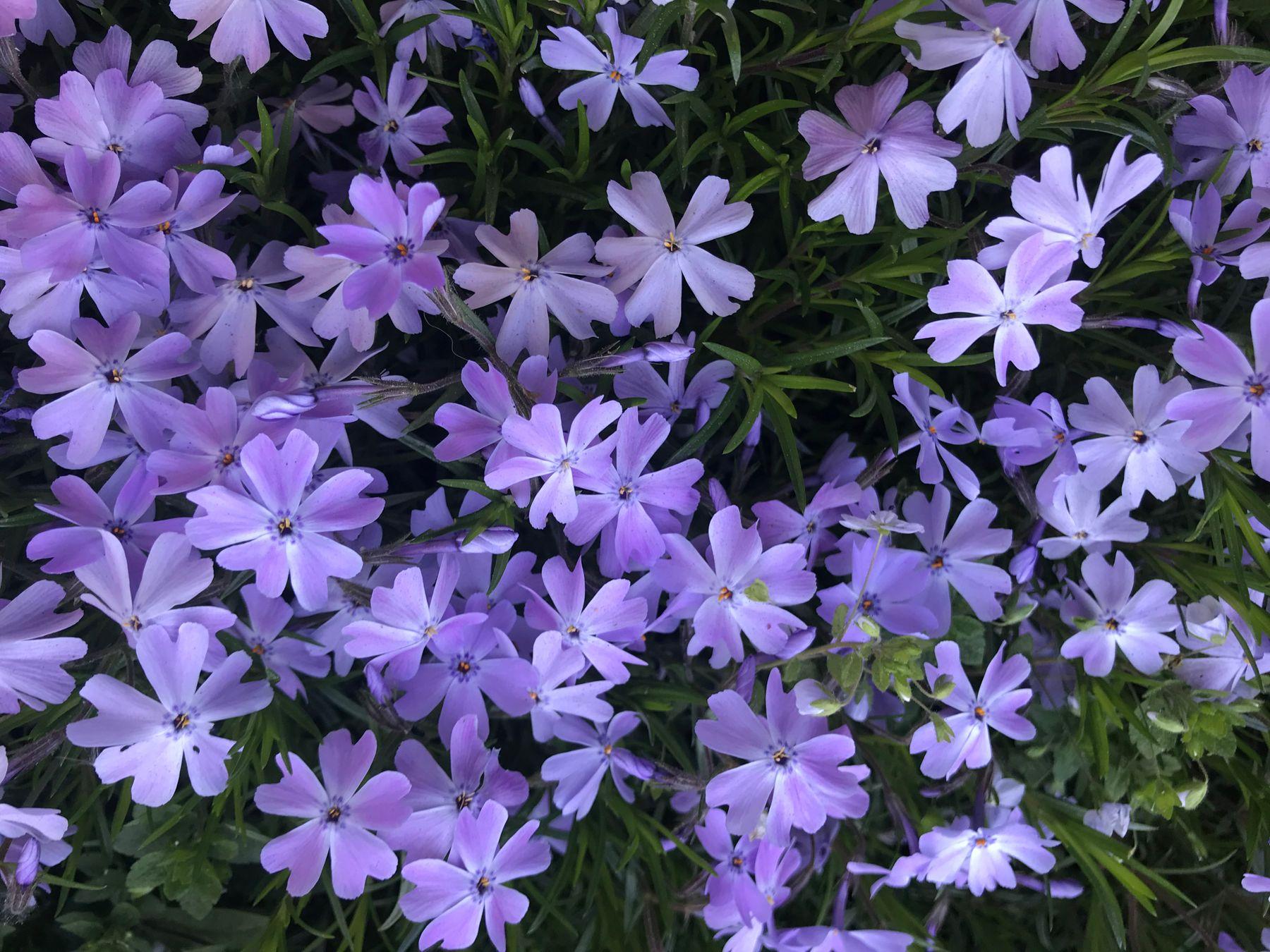городские цветы цветы лето город нежность