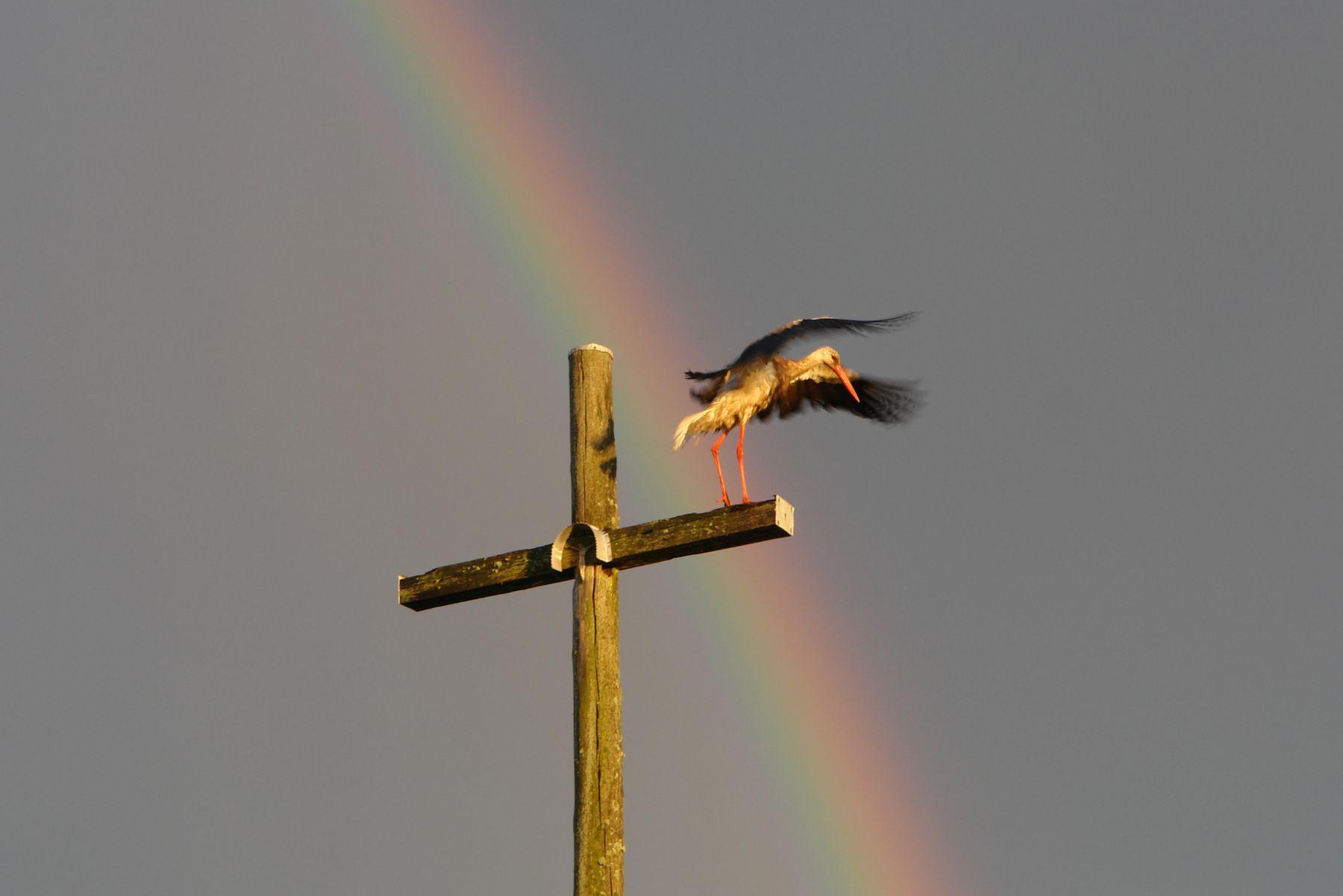Детей дает Бог, а приносит аист. крест радуга аист птица небо