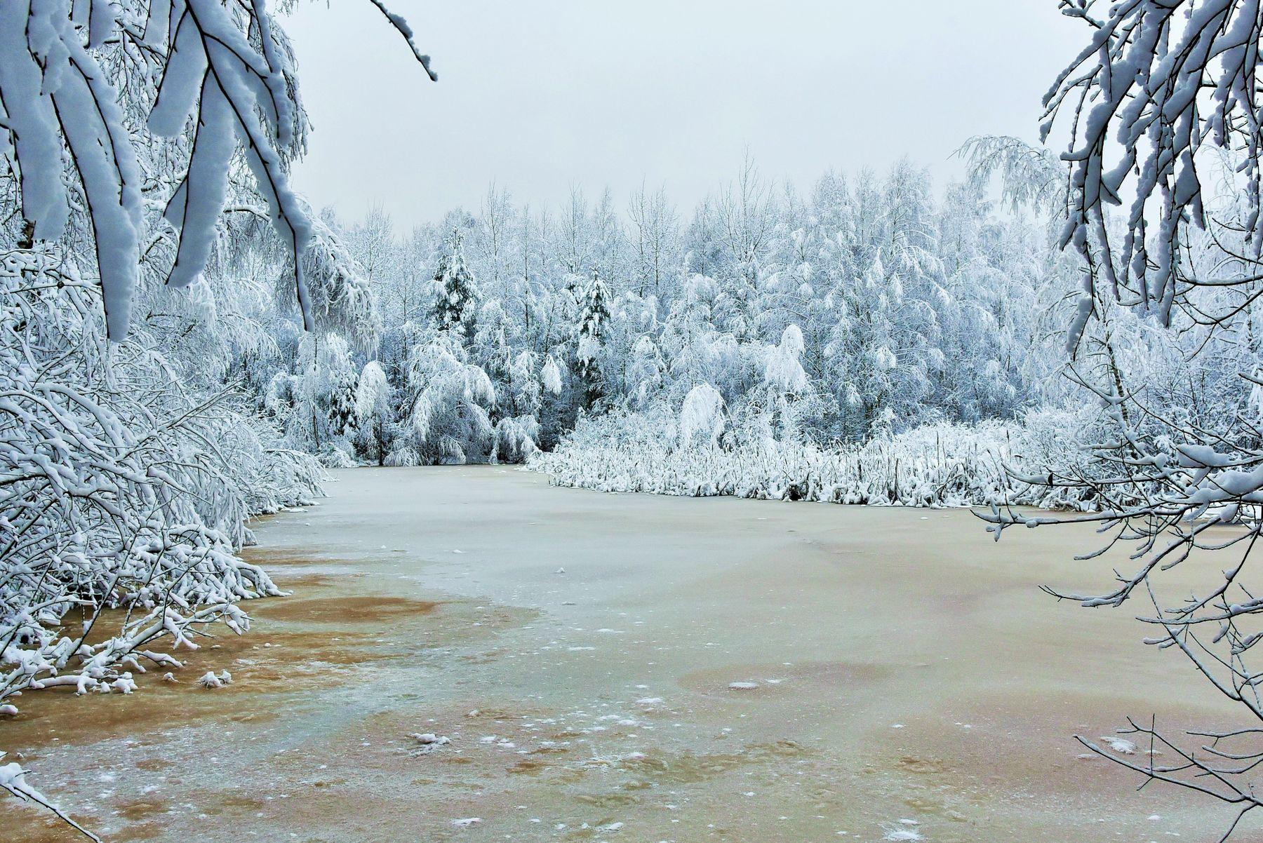 Зима ... зима февраль