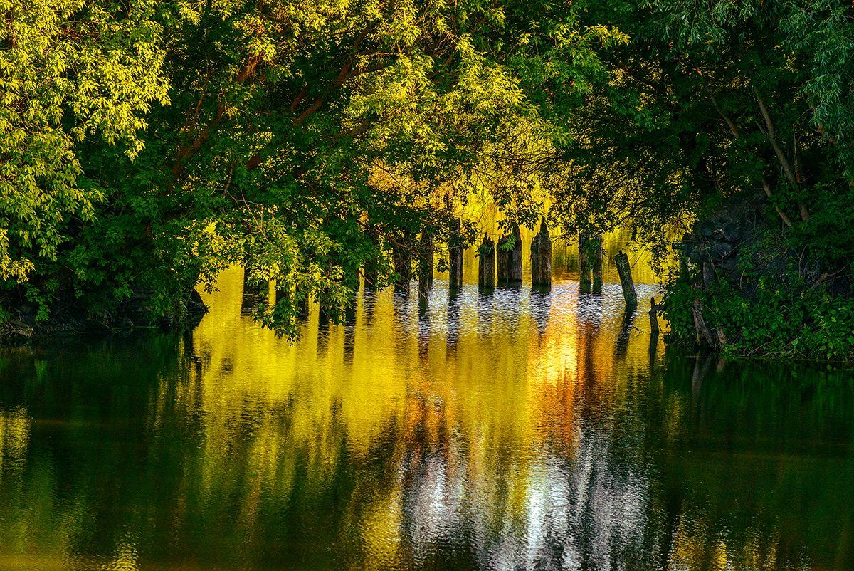 Старый пруд... Лето июнь пруд закат