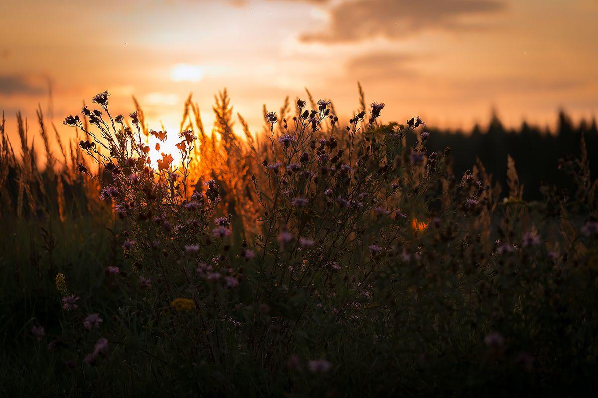 В лучах заката закат поле вечер закатное небо на закате вечерний пейзаж