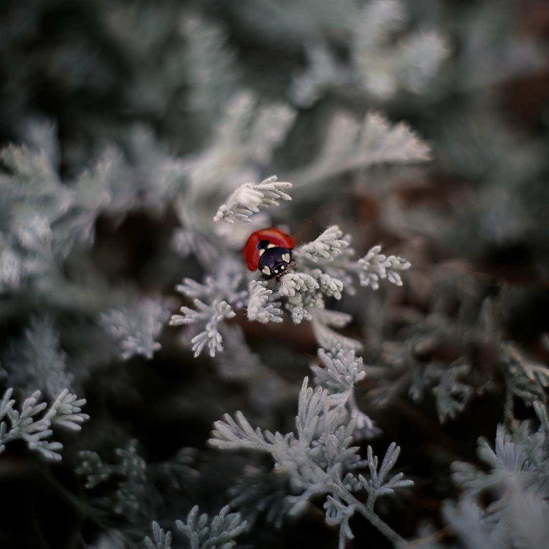 пятна-сердечки природа насекомые божья коровка лето чудеса природы