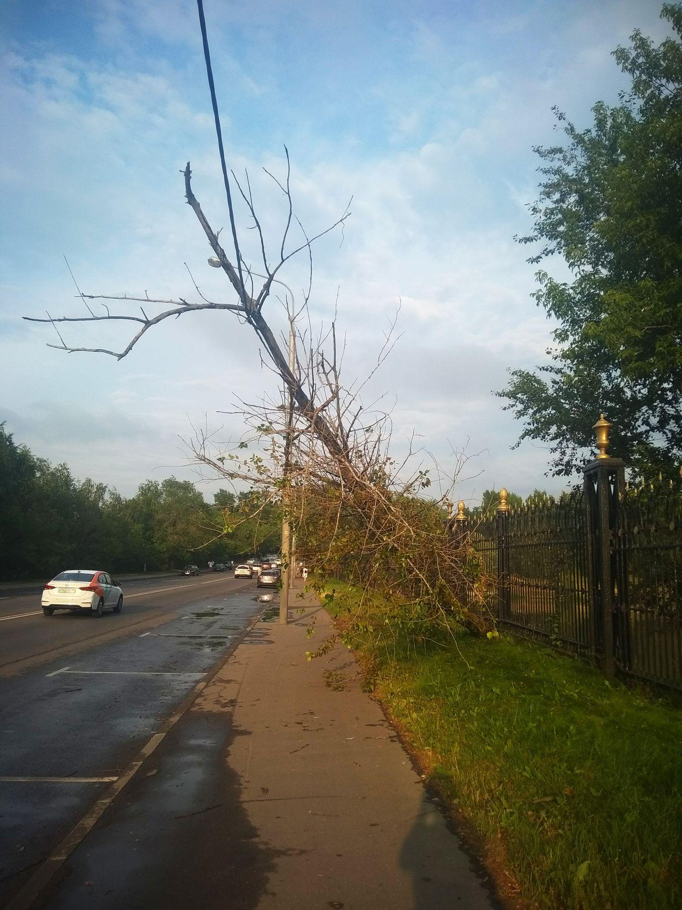 Дерево упавшее на провода Дерево провод дорога