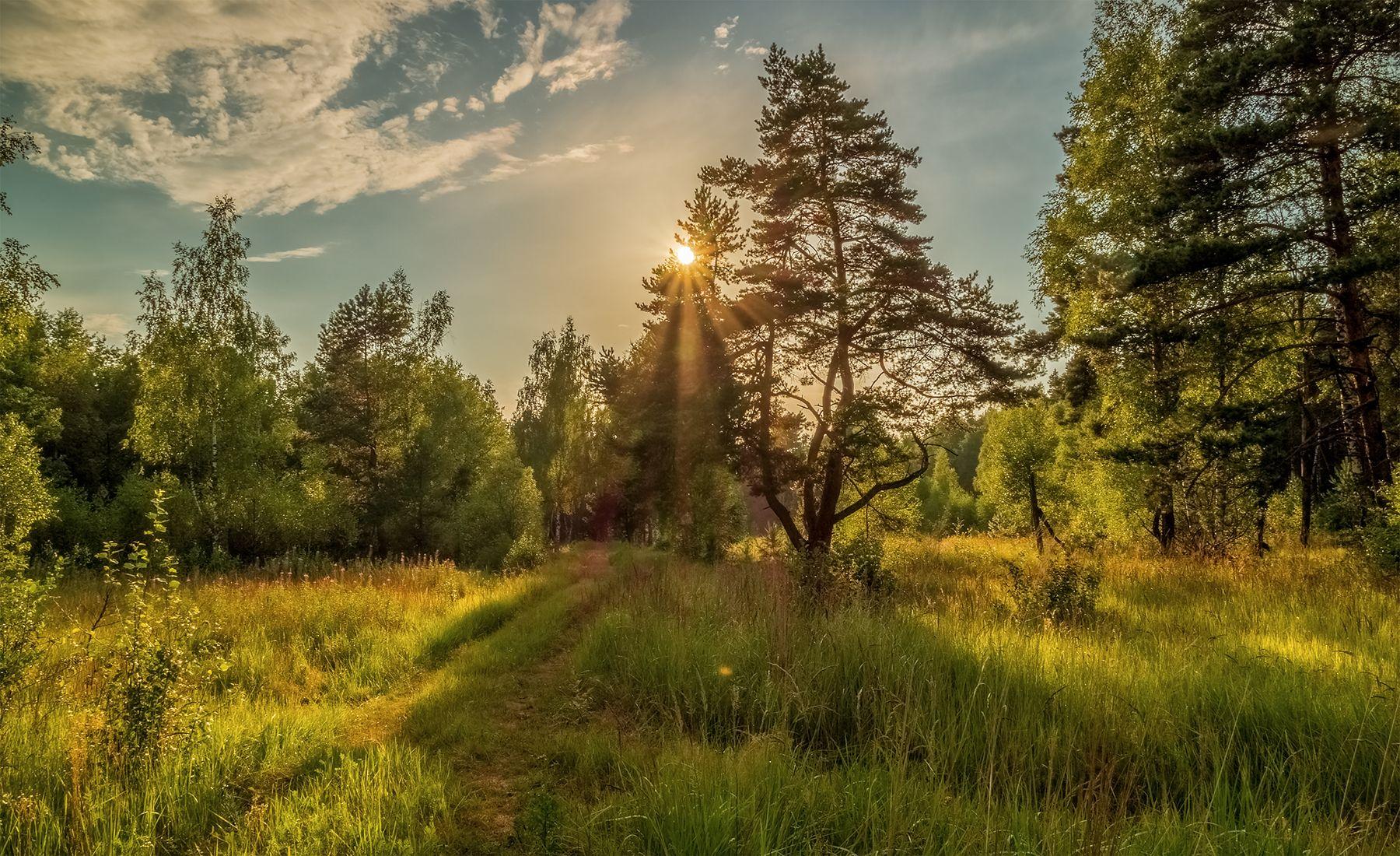 На закате дня в лесу # 02