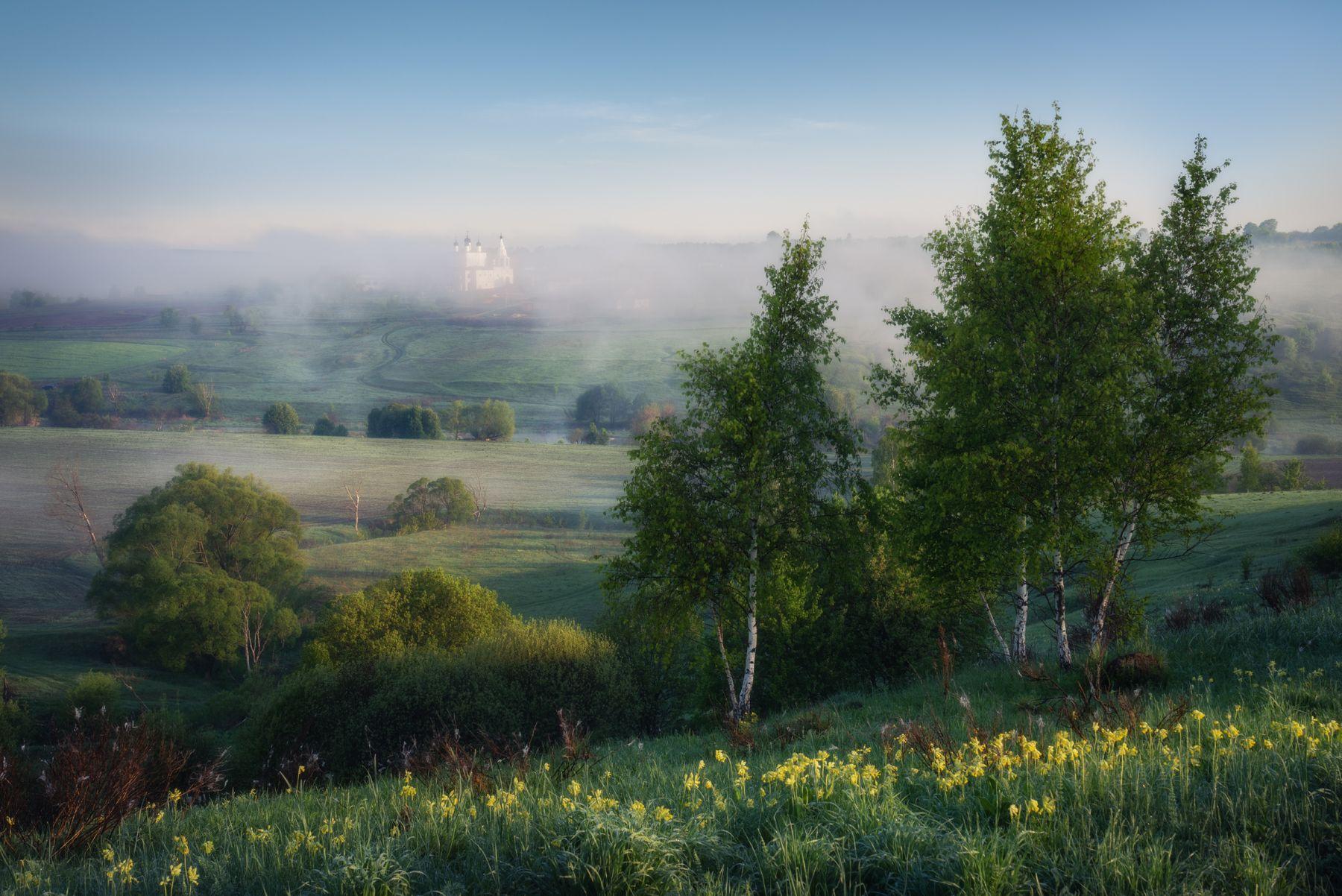 Примула цветет.. тульская область анастасов монастырь тульские пейзажи одоевский район одоев анастасово весенний пейзаж весна май примула первоцвет русский березки луг долина реки река упа утренний туман