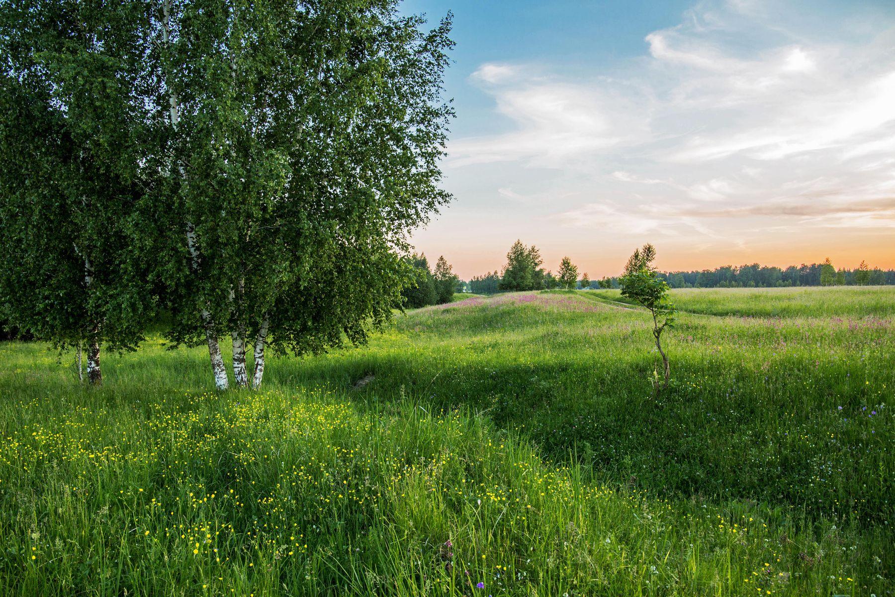 *** природа пейзаж лето вечер татарстан дубровка