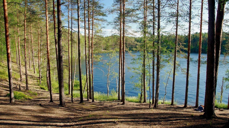 Озера Карельского перешейка 4 Лето озеро вечер сосны