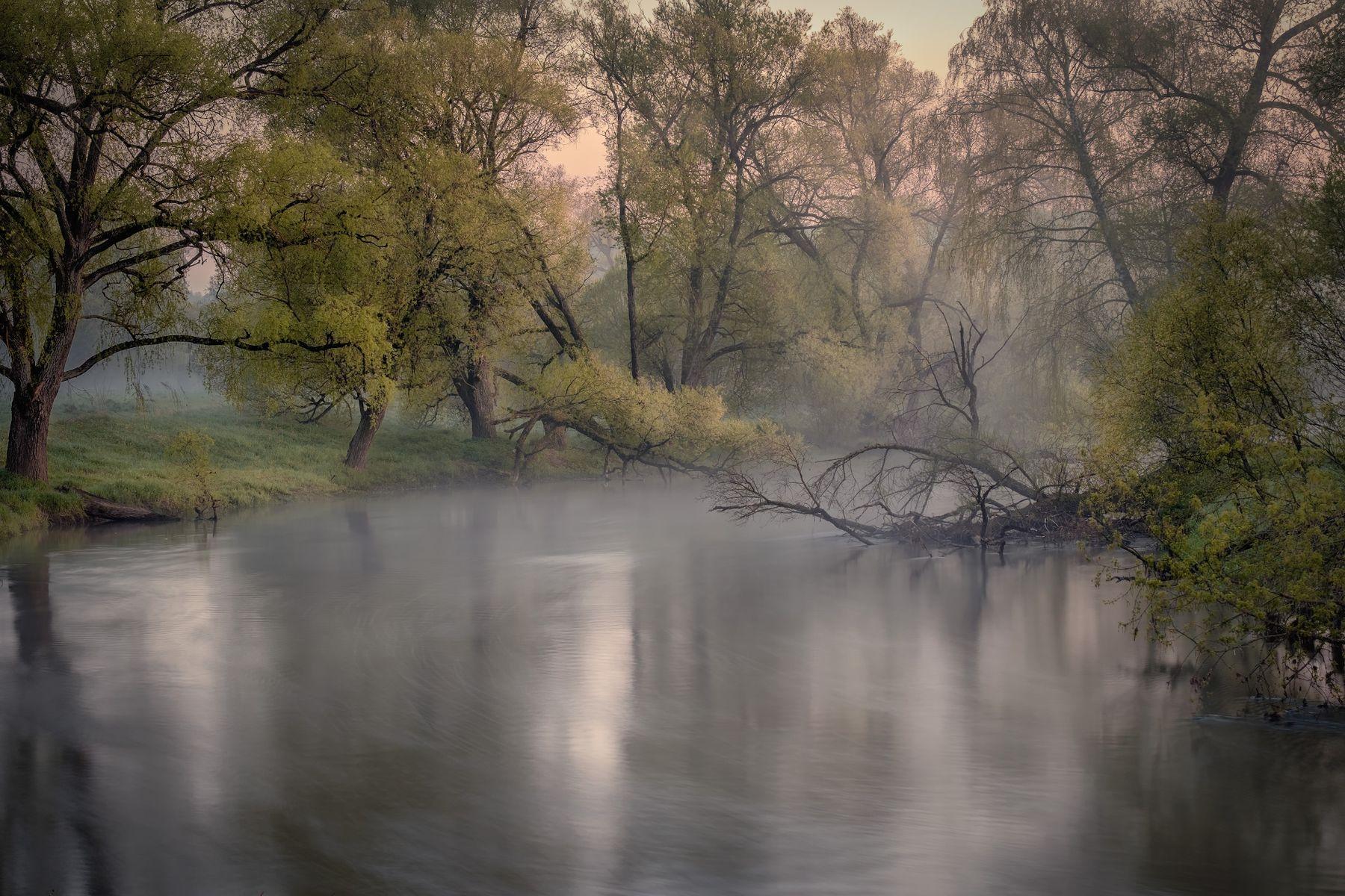 Хранители реки река истра утро деревья зелень поток рассвет вода пейзаж