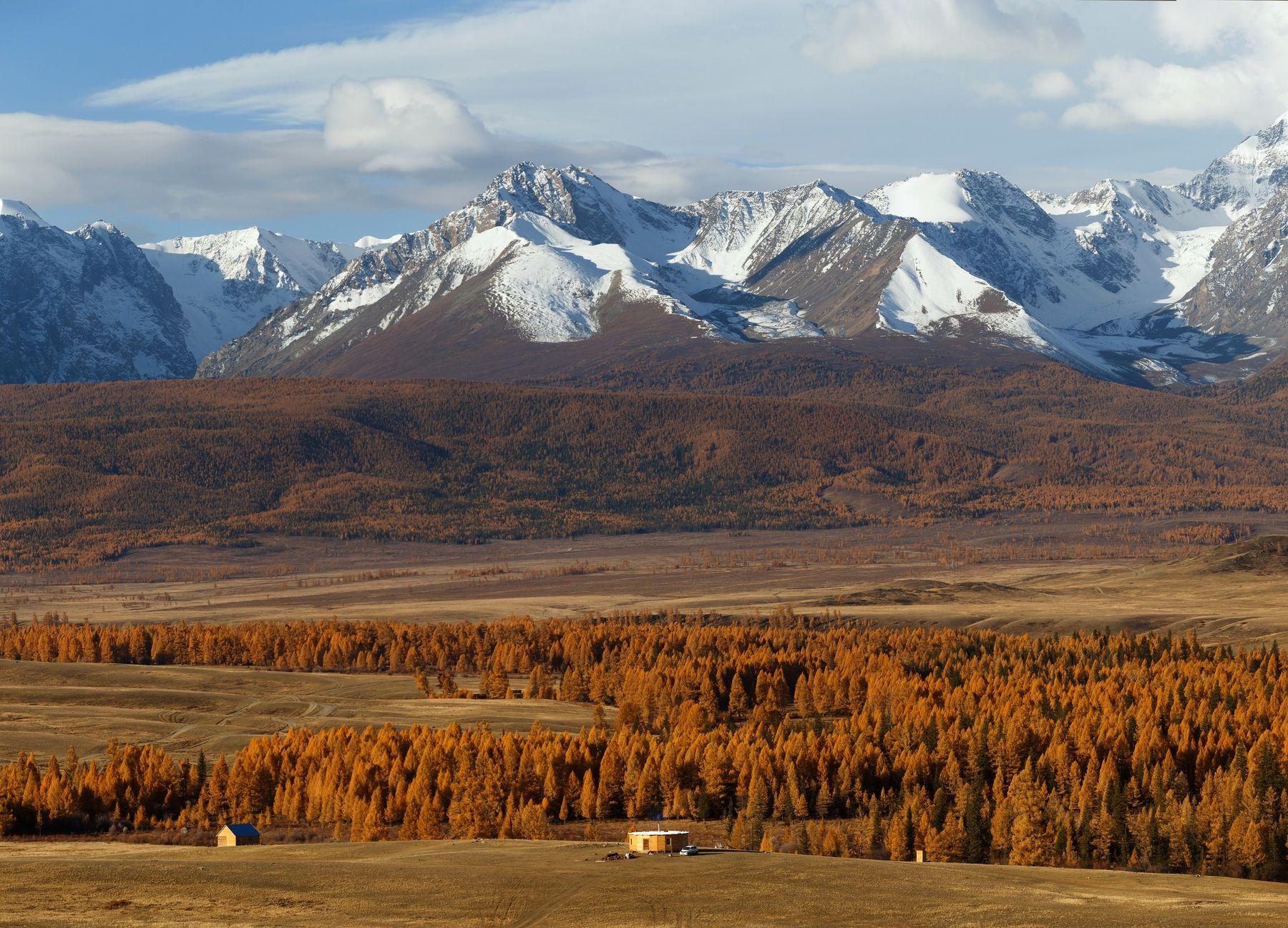 Северо-Чуйский хребет природа горы пейзаж осень лес