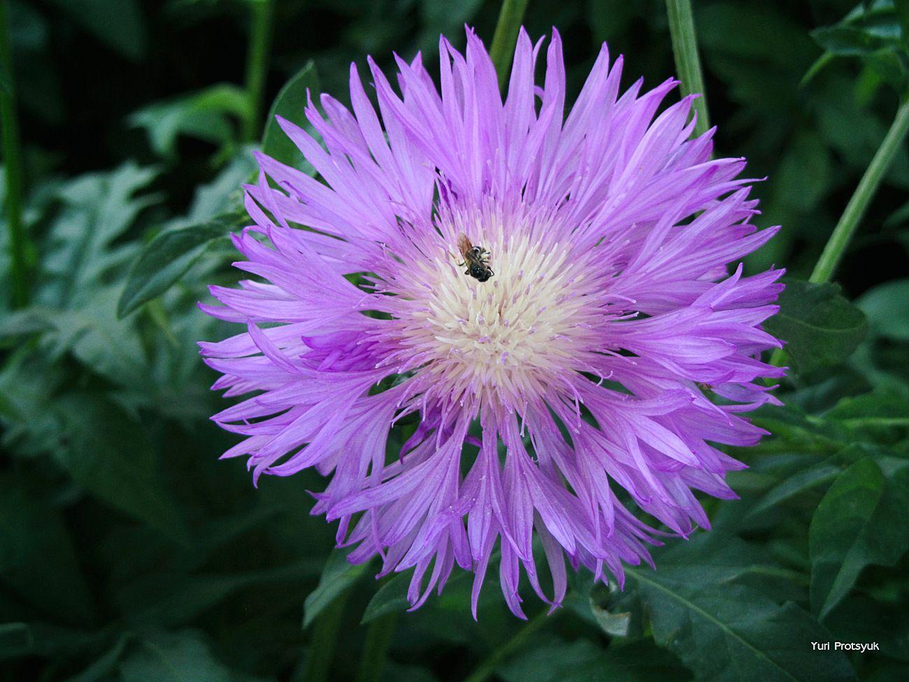 *** flower