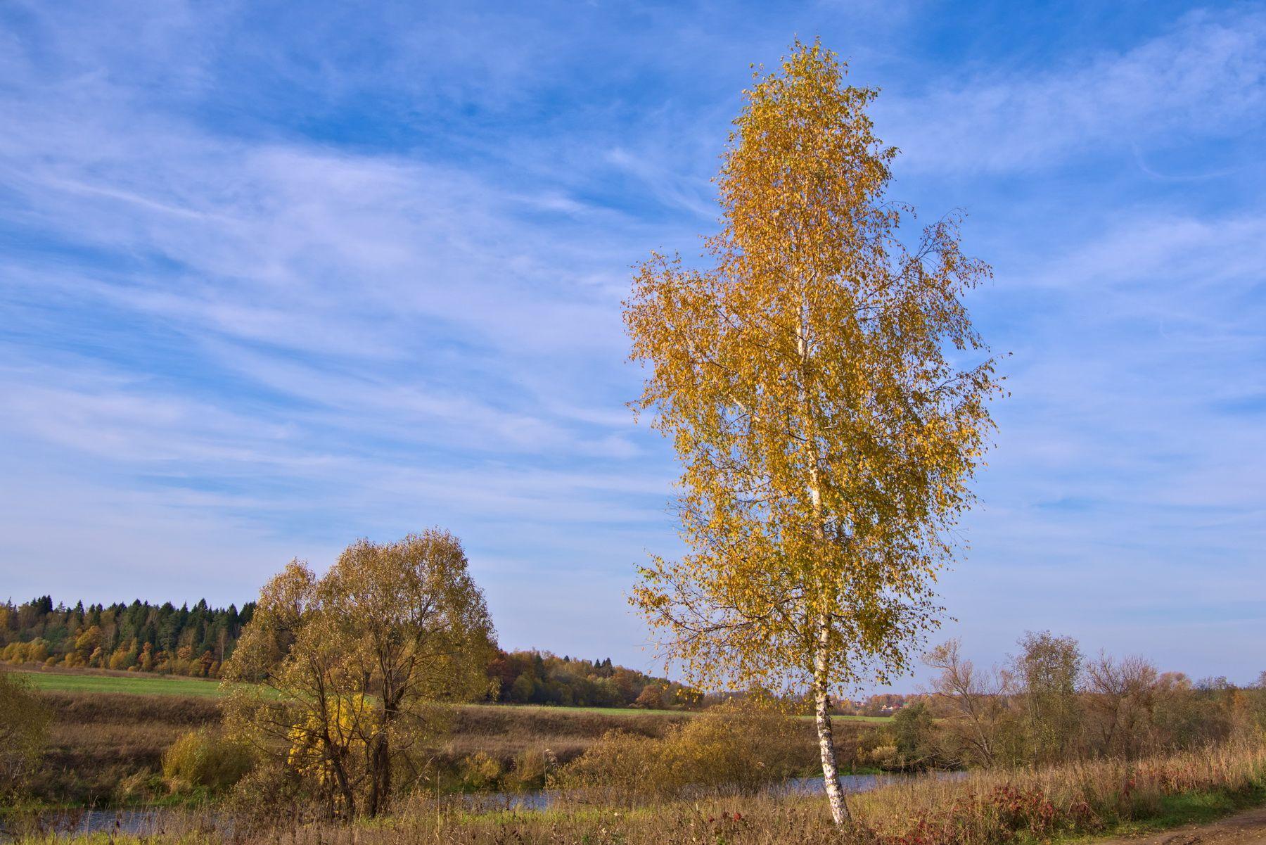 Осеннее... берёза река осень поле небо облака лес пейзаж