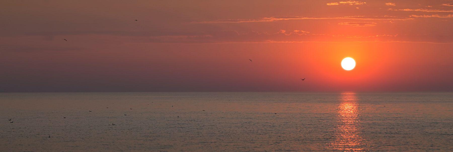 Рассвет и чайки море солнце чайки