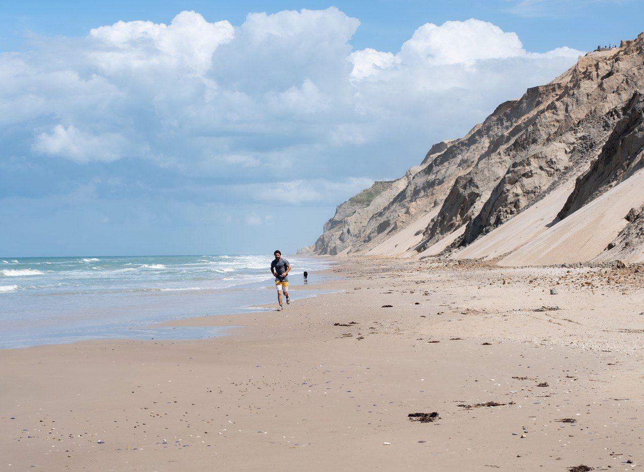Дания Человек собака природа берег пляж море