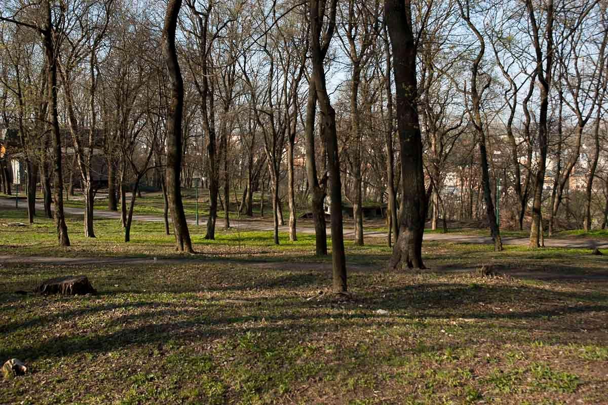 Пришла весна. весна парк солнечный день