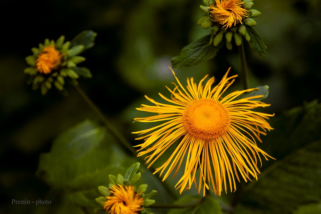 Тимбилдинг... цветок бутон желтый пестик тычинка трава