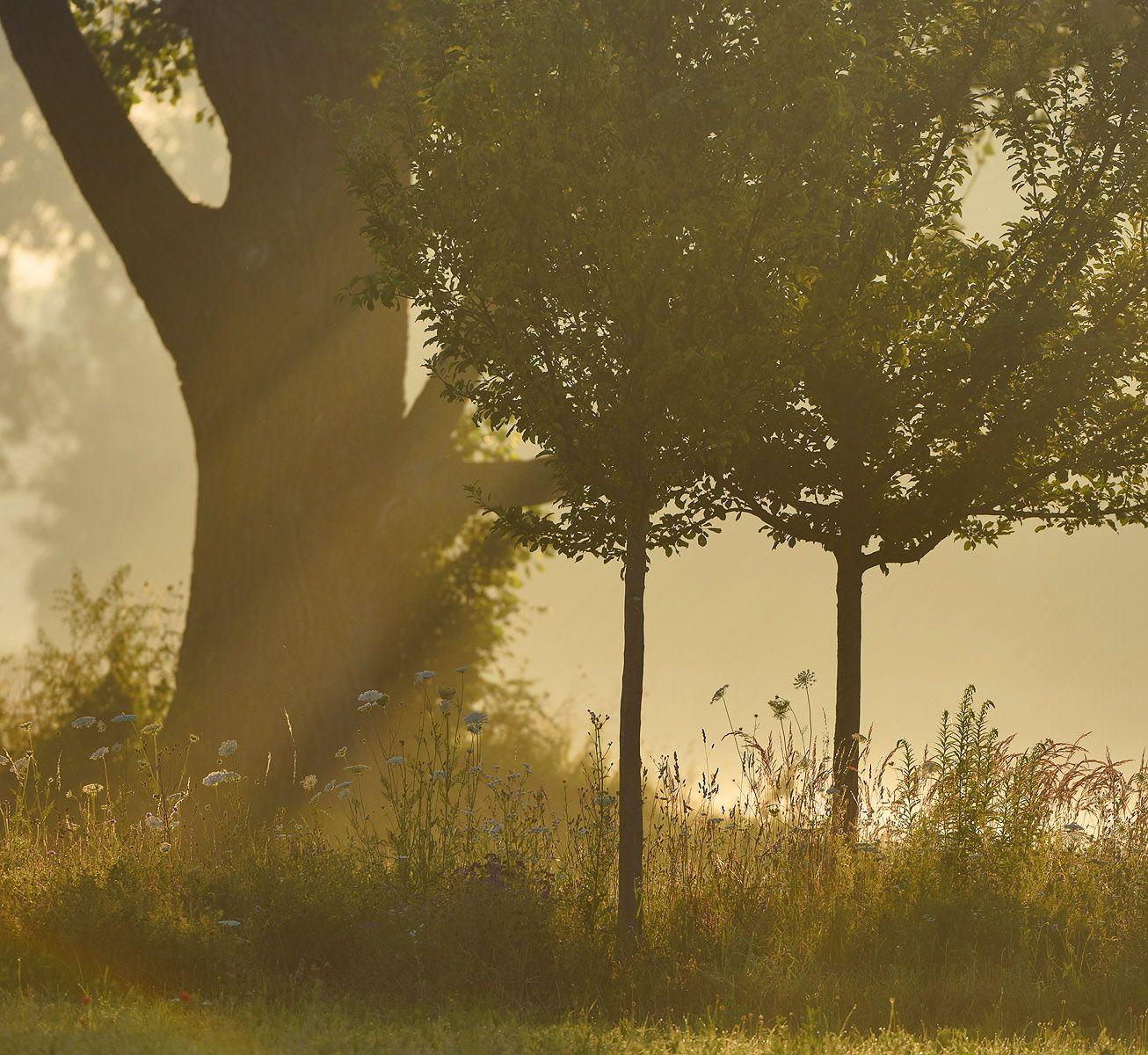 Солнечный этюд туман солнце дерево лучи