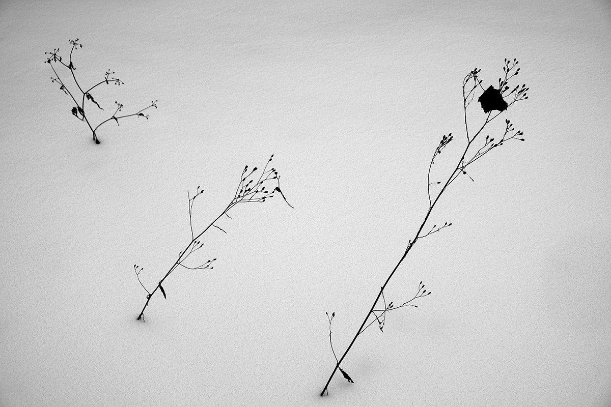 *** снег пейзаж травинки веточки зима под снегом