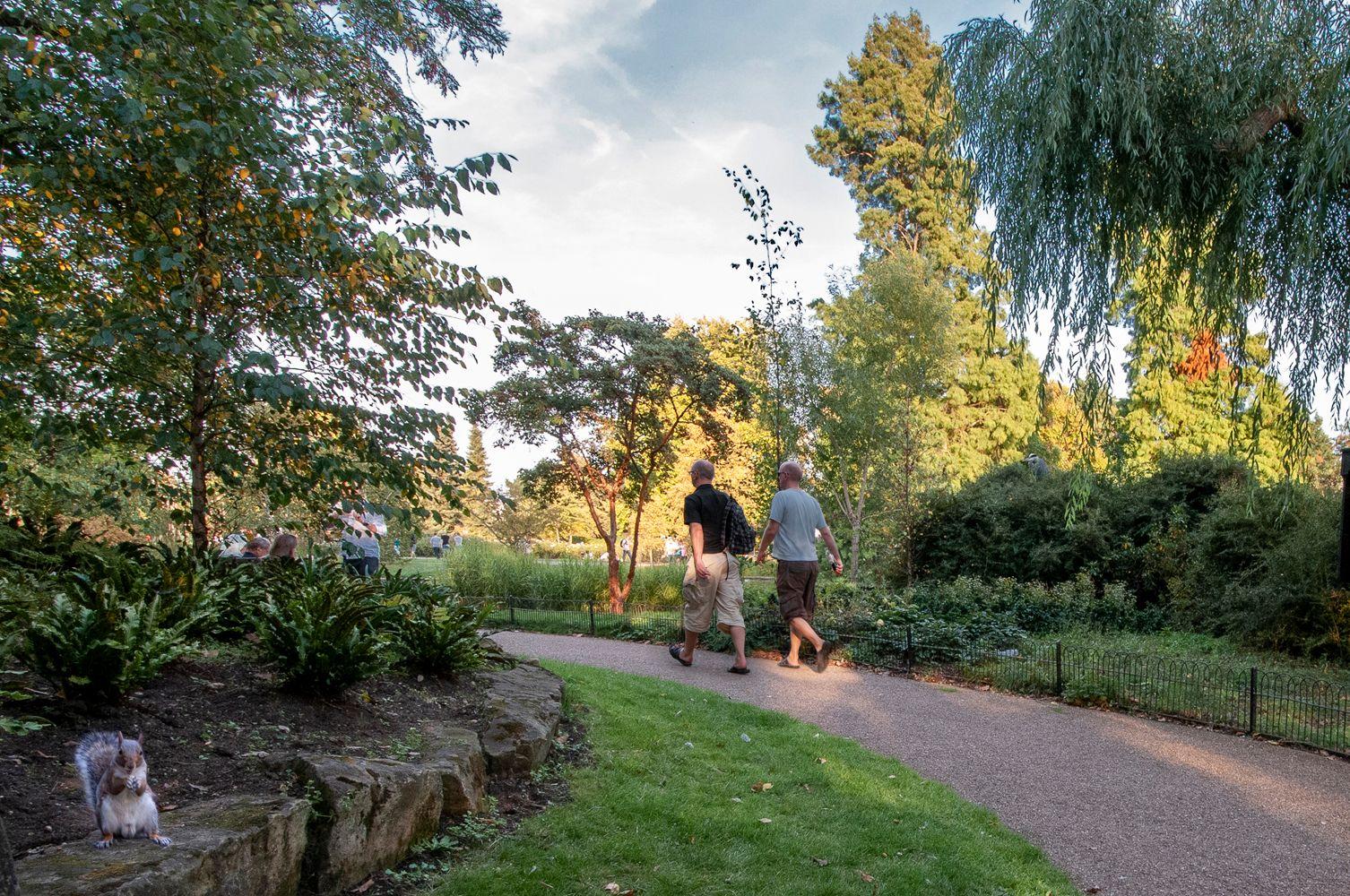 Хозяйка парка... Лондон Риджентс-Парк белка