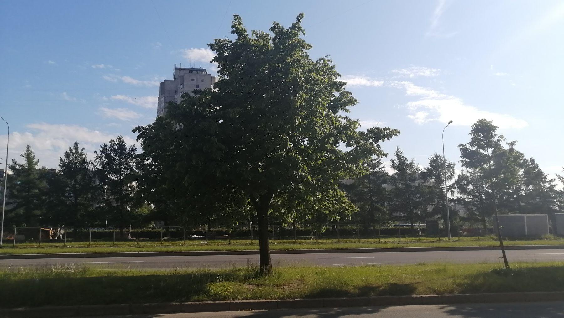 Июнь Деревья 2021 Санкт-Петербург деревья лето