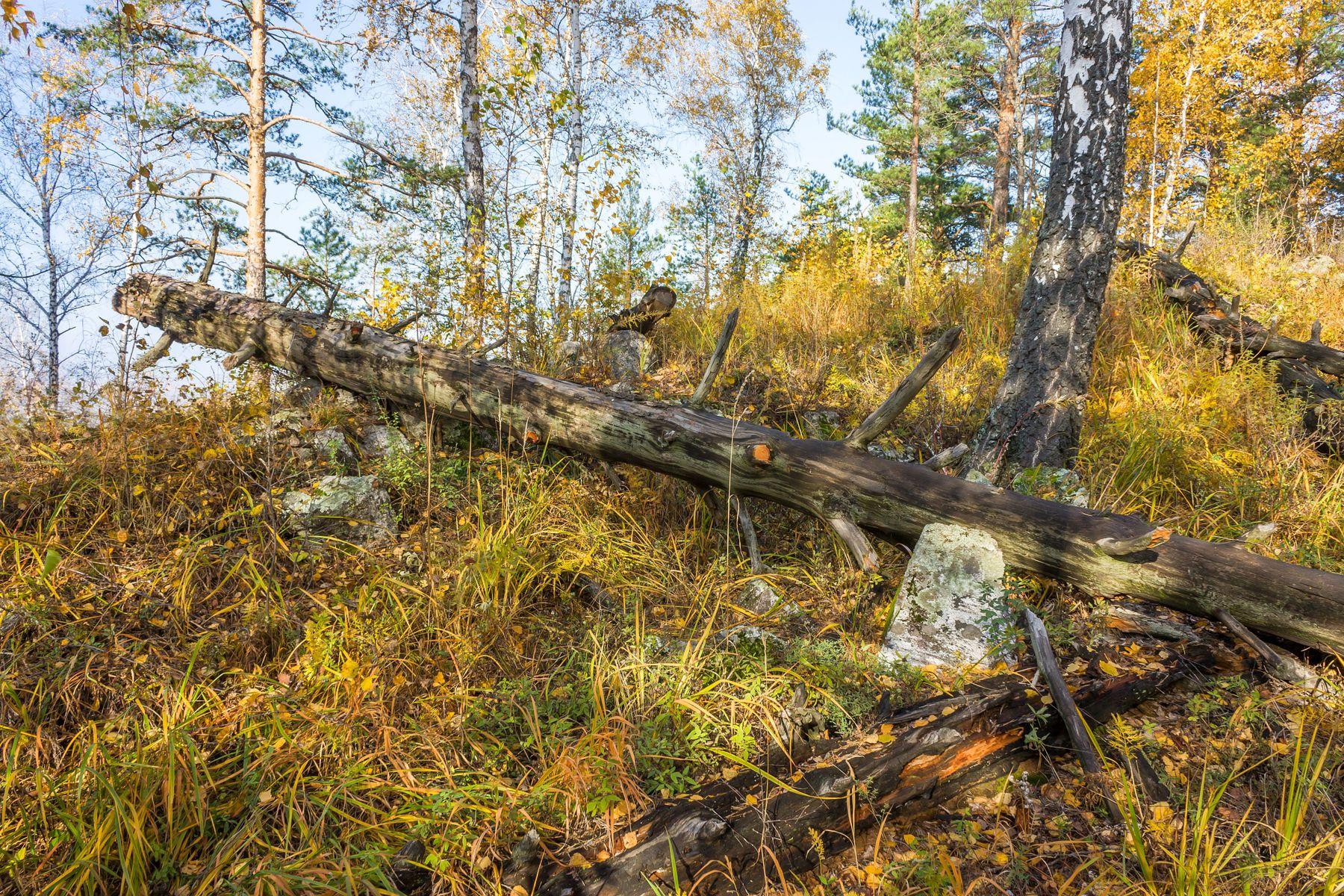 Лесная картина Южный Урал Миасс осень лес