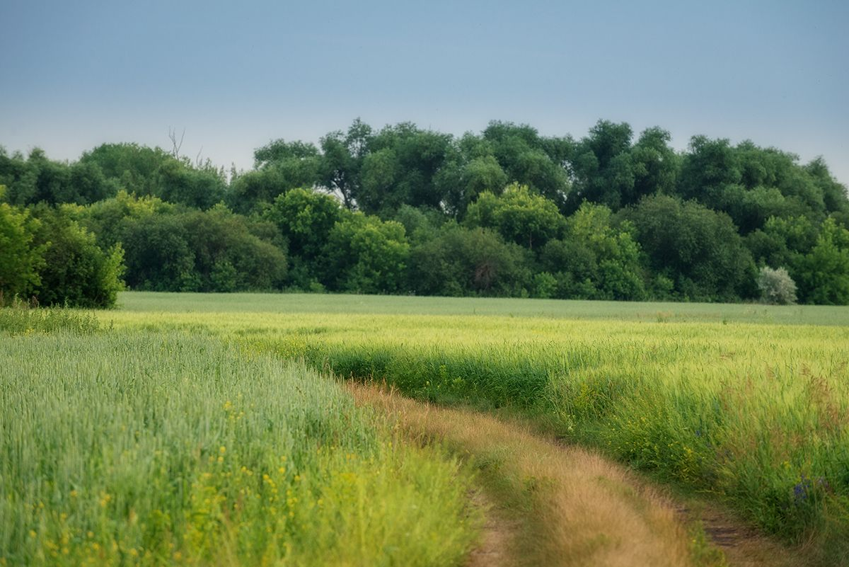 Дорога... Лето июнь дорога поле