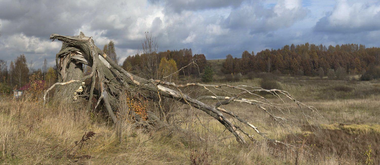 Согнутое дерево
