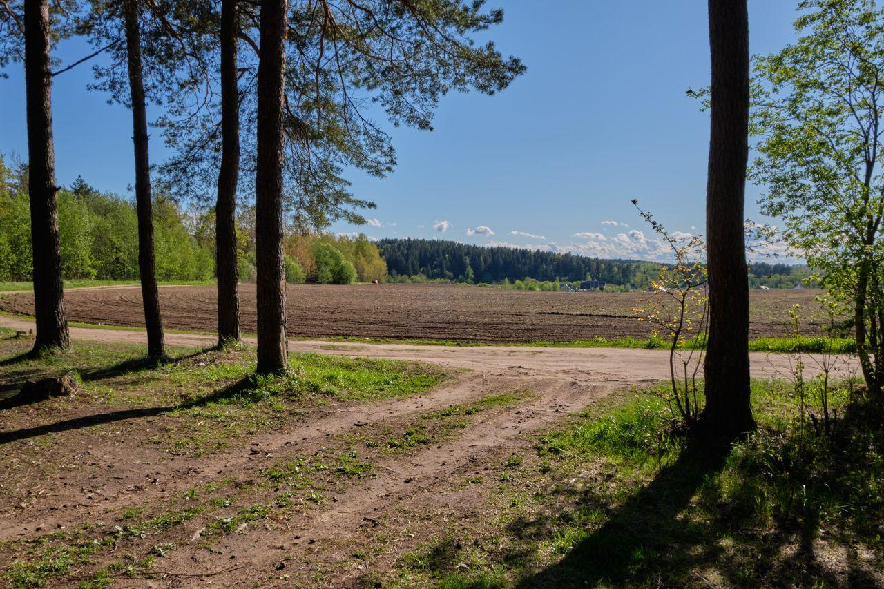 На краю поля 2 поле солнце дорога сосны горизонт лес