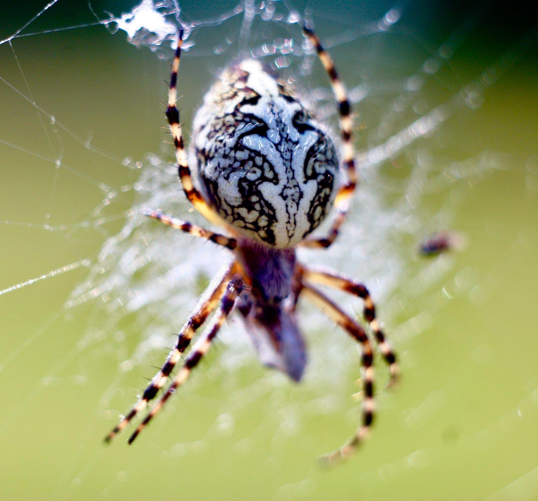 Паук ест паук паутина природа макро