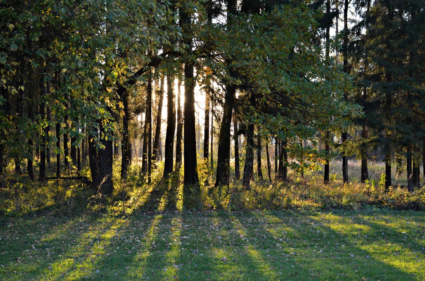 *** Москва Новофёдоровское лес прогулка сентябрь осень закат свет тени