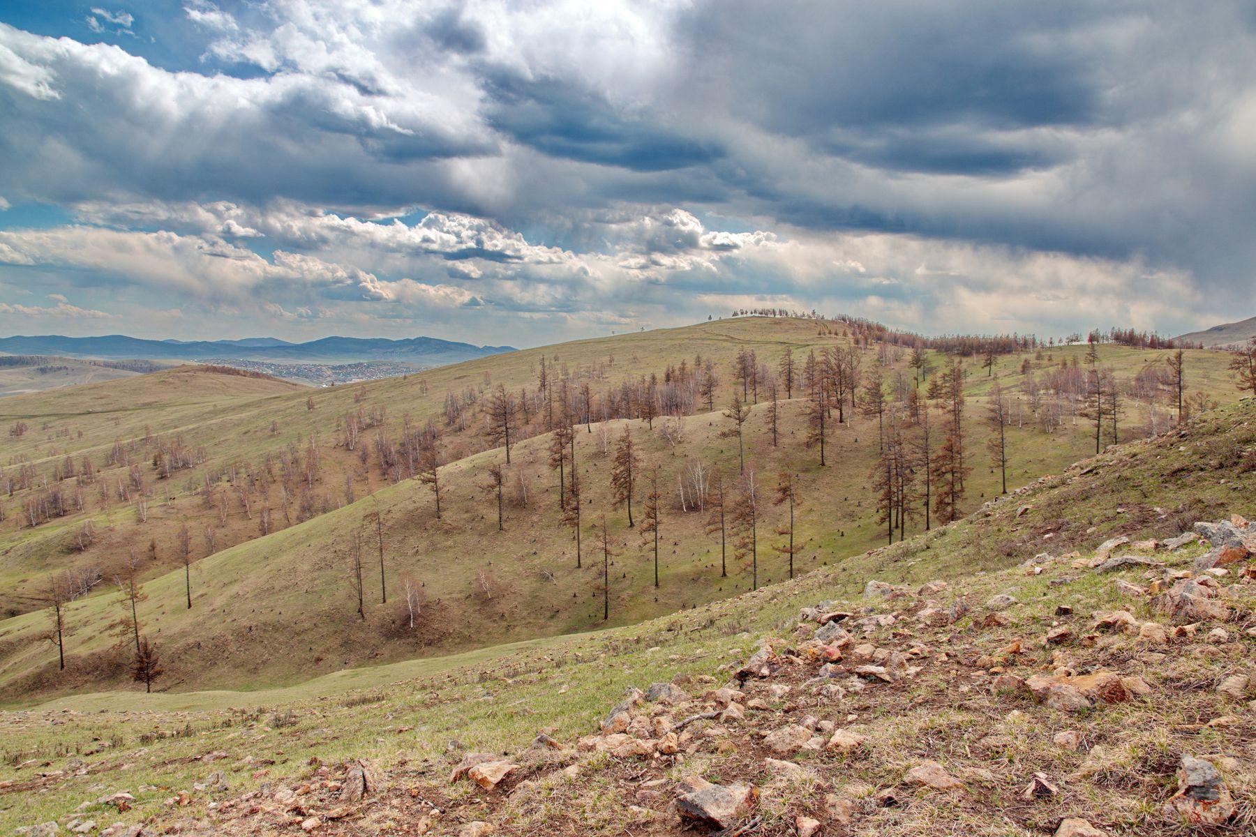 В сопки пришла весна трава сопки пейзаж облака небо камни деревья