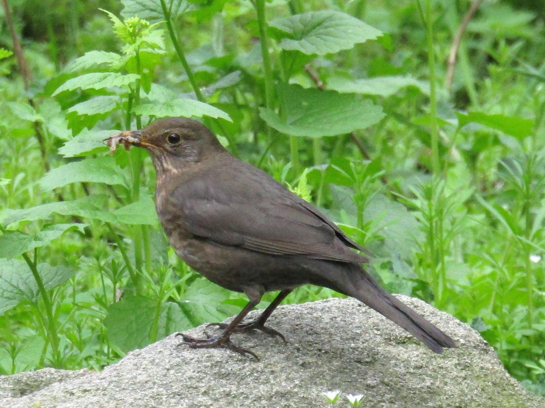 Перекус. птица парк