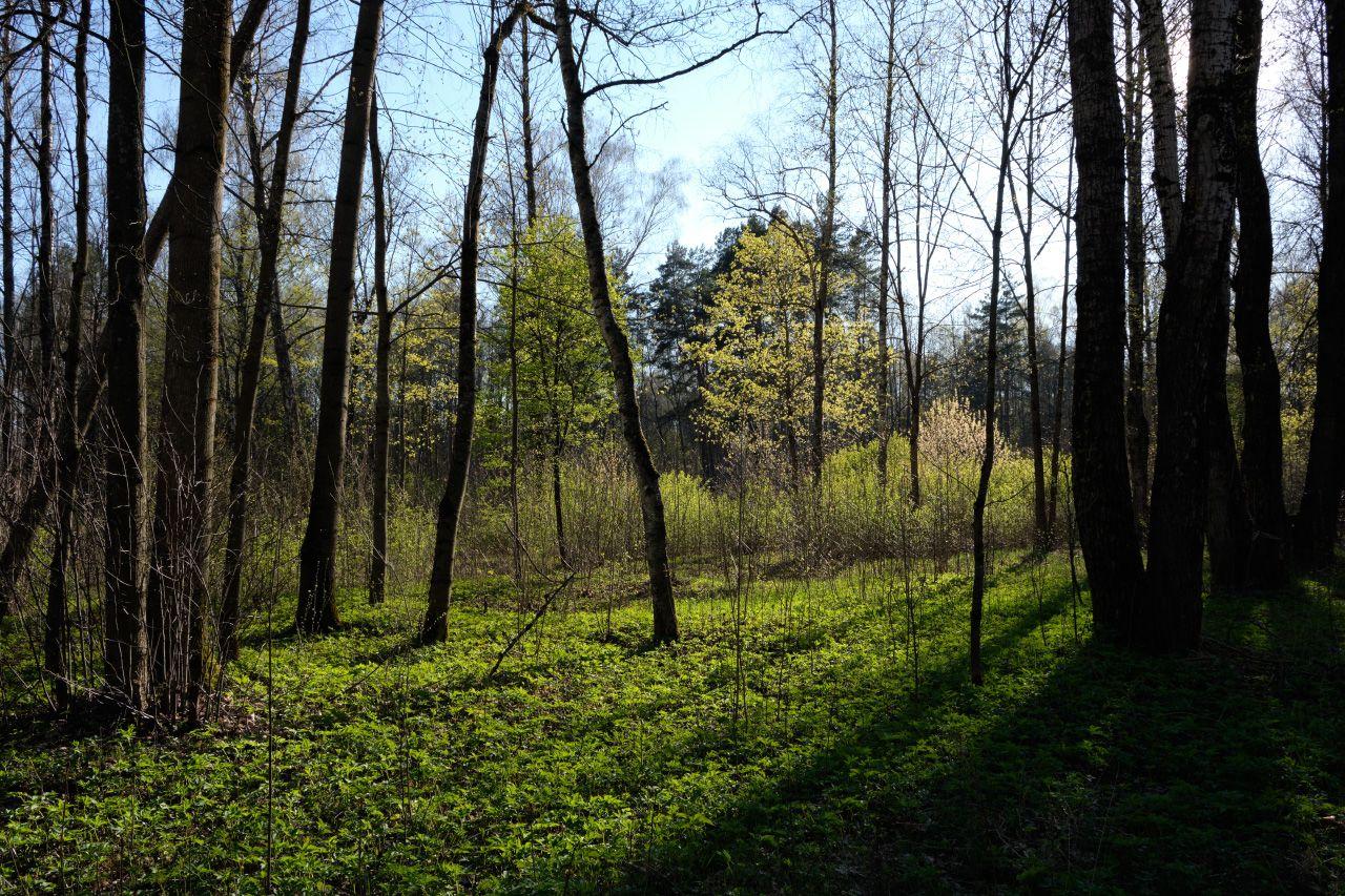 Прогулка в лесу 10 лес солнце деревья стволы ветви трава тени небо