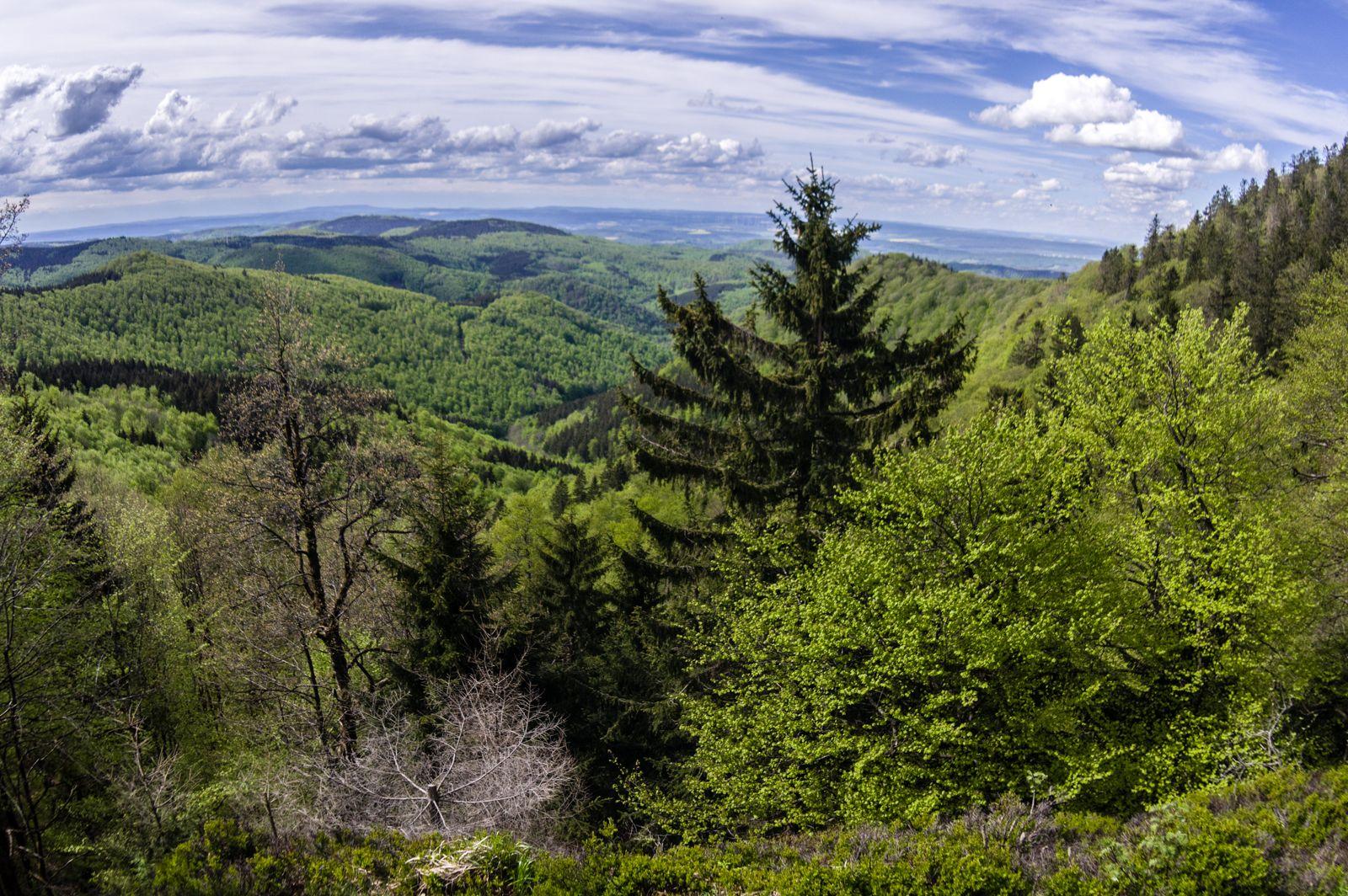 Тюрингский лес весной.