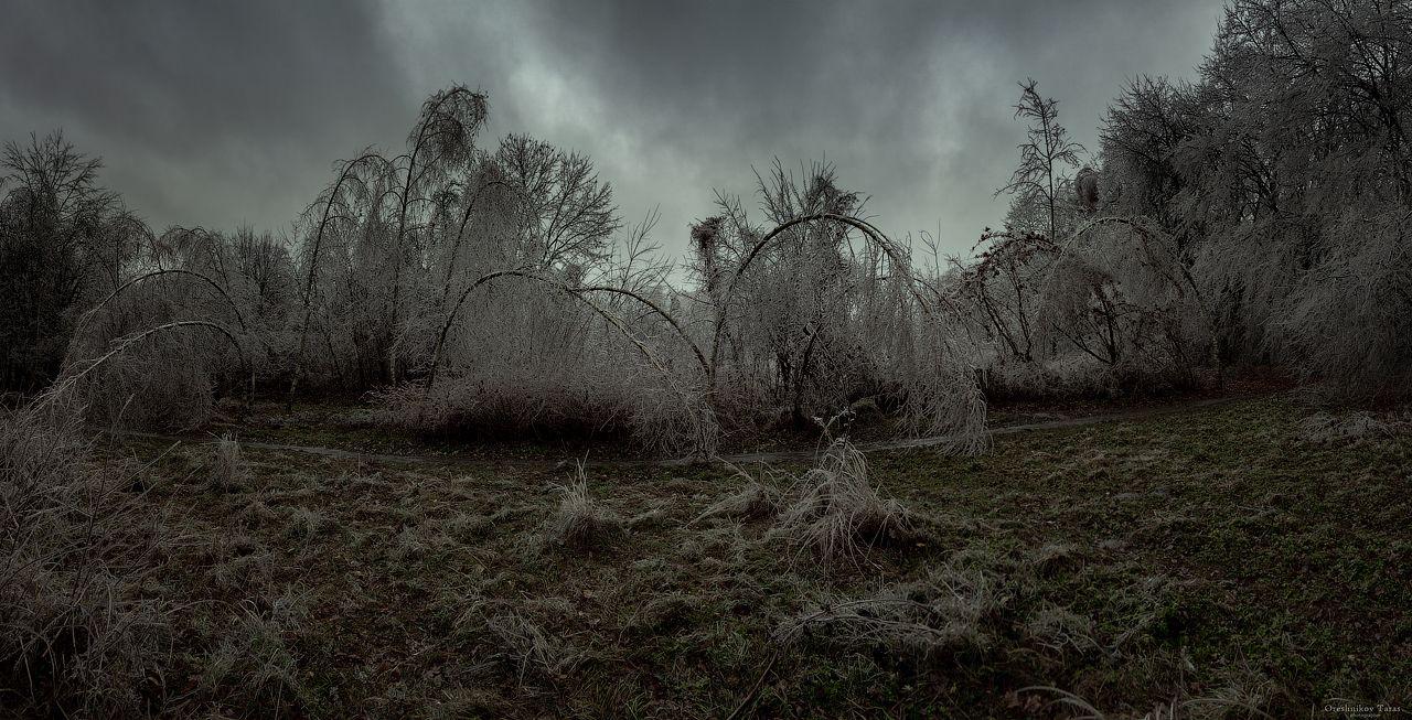 *** пейзаж зима природа лес лед мороз парк деревья